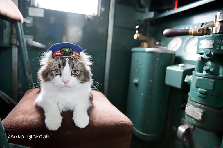 この写真は猫が電車の運転手なったところ