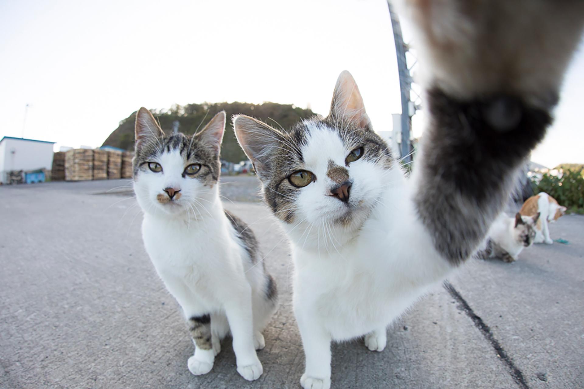 この写真は猫がカメラに手を掛けているところ