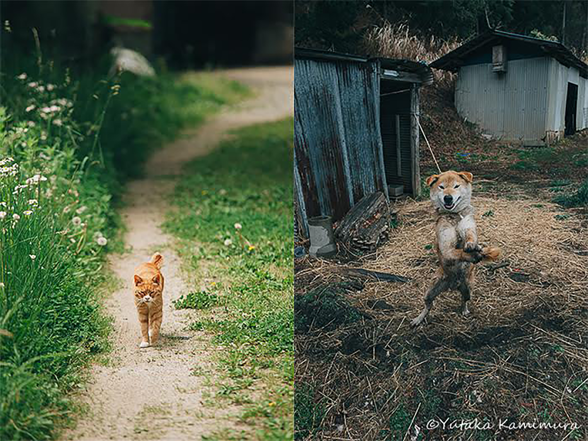 この写真は犬と猫