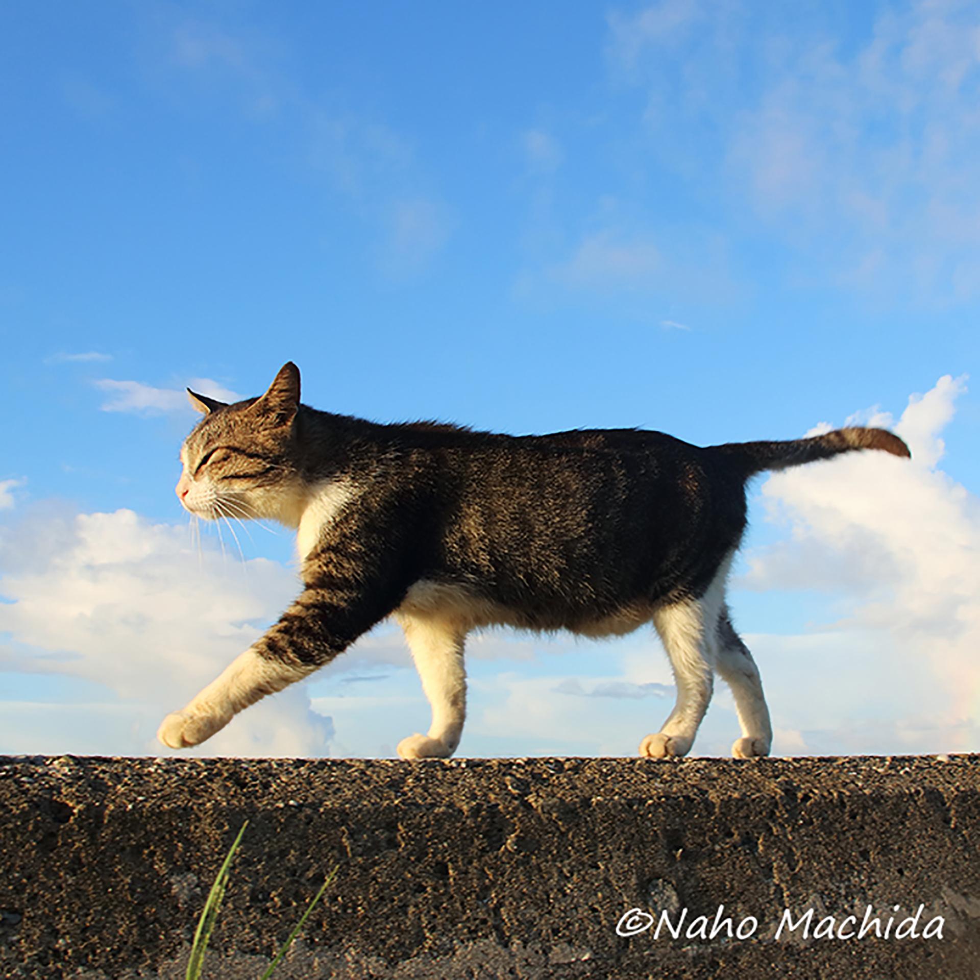 この写真は道をのんびり歩く猫