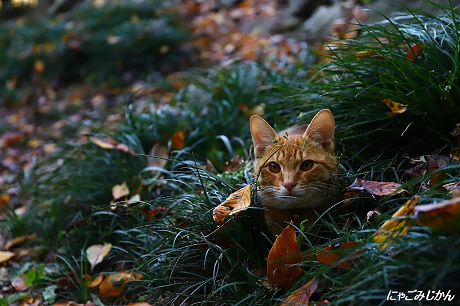草むらに隠れる猫