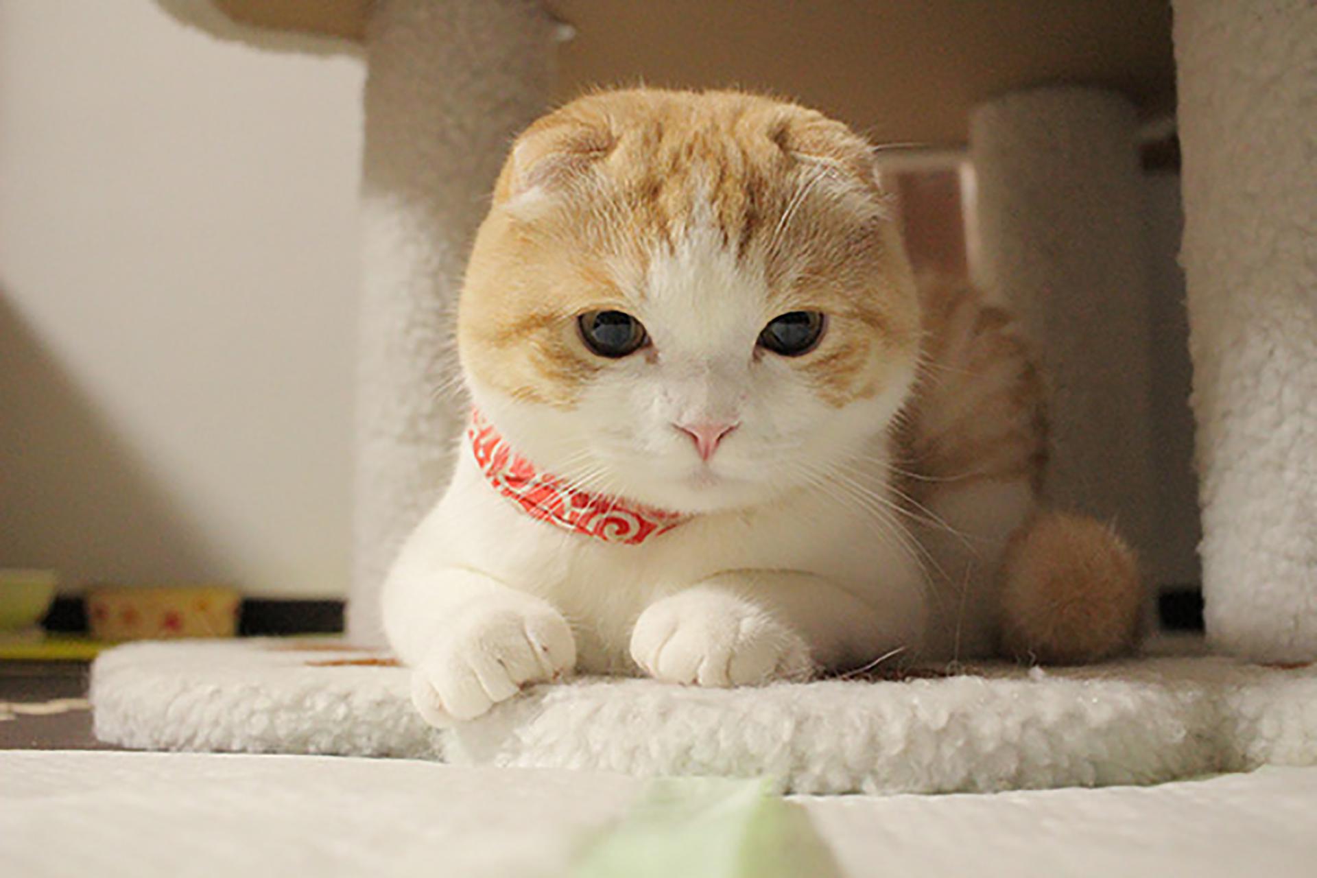 かわいい猫の写真です