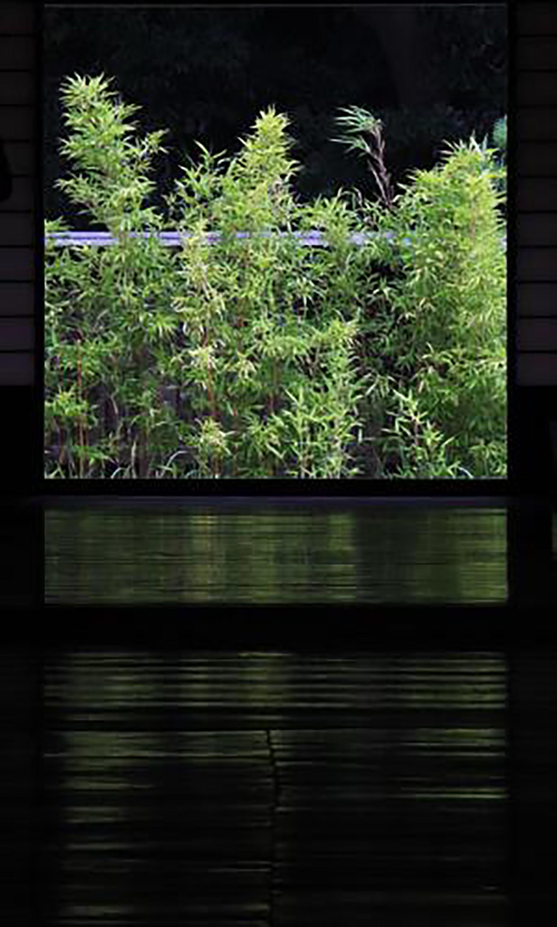 この写真は民家の中から、庭を撮影したものです