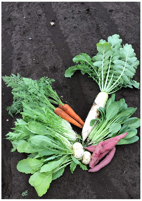 この写真は野菜のイメージです