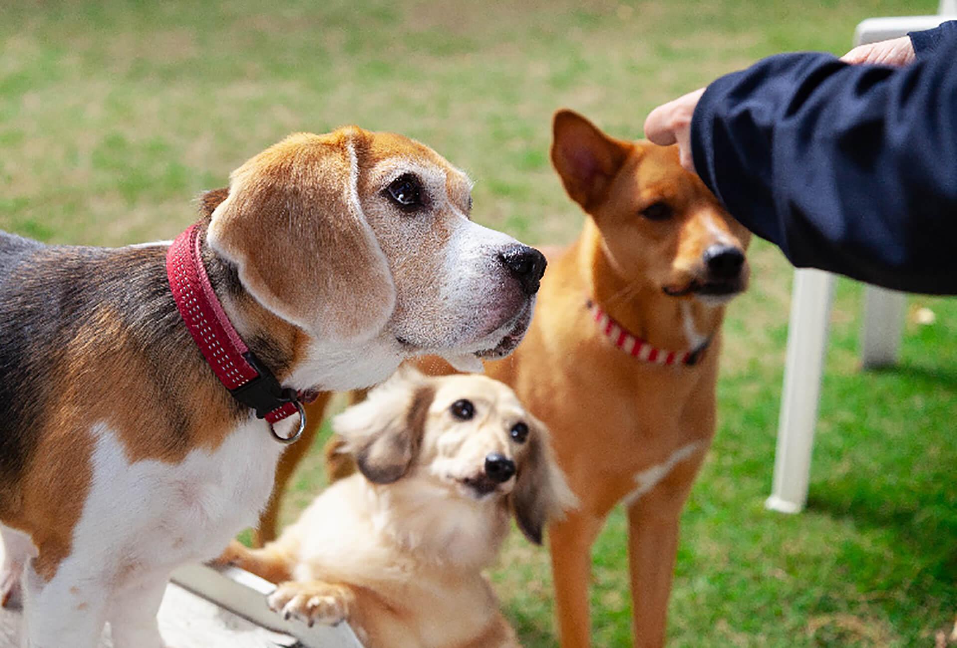 この写真は社員犬と触れ合う様子