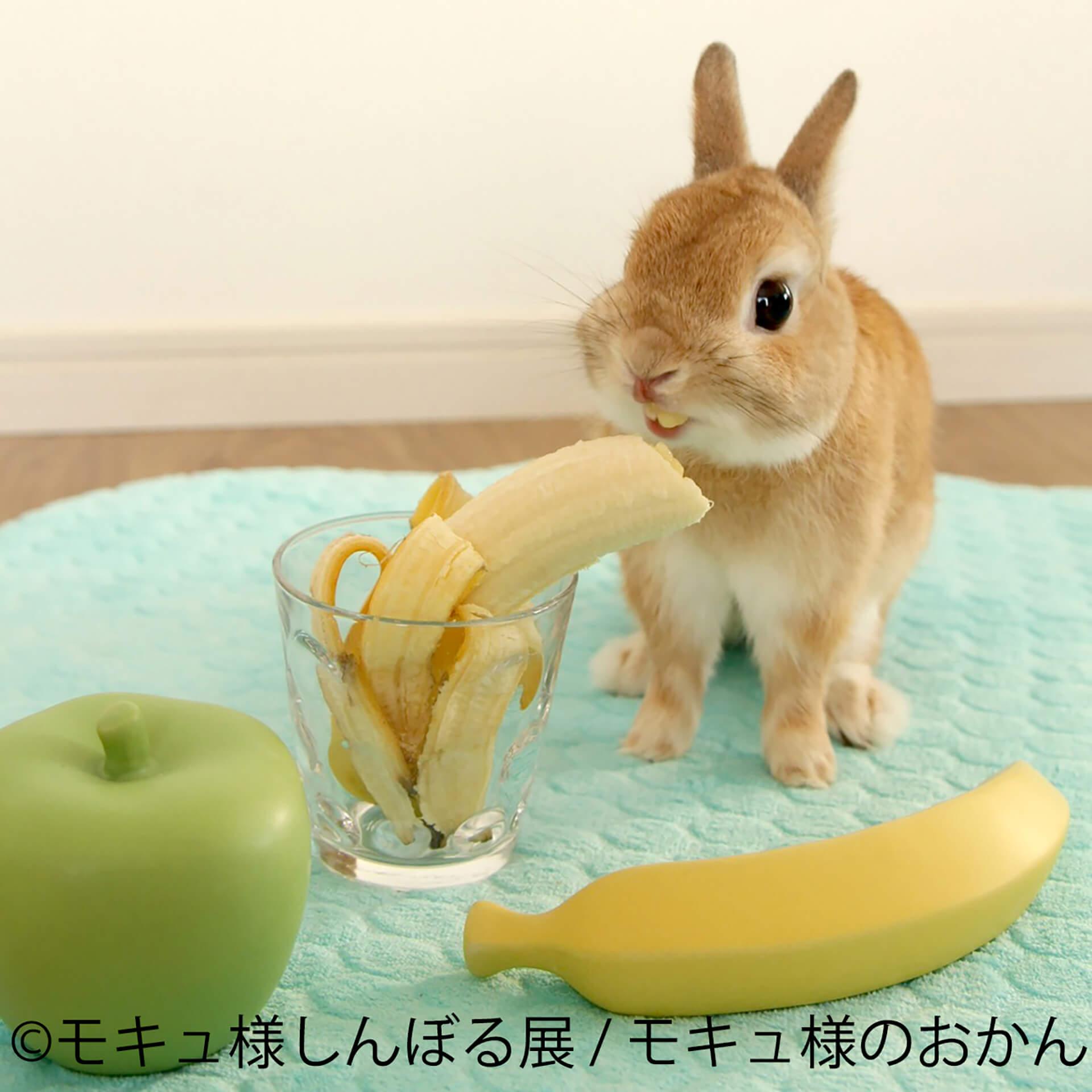 この写真はモキュ様しんぼる展の展示作品でモキュ様がバナナを食しています