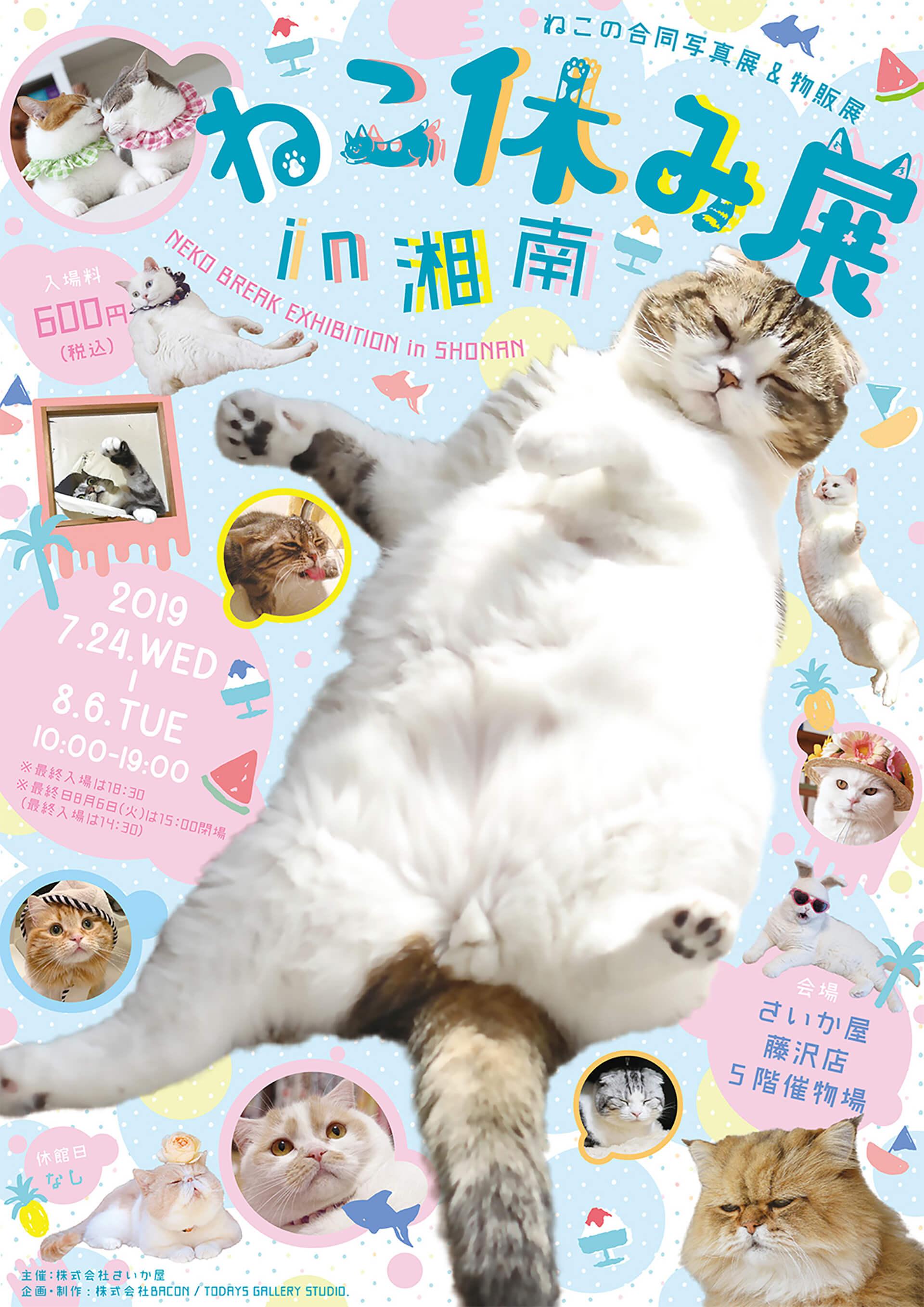 この写真はねこ休み展 in 湘南の告知ポスターです