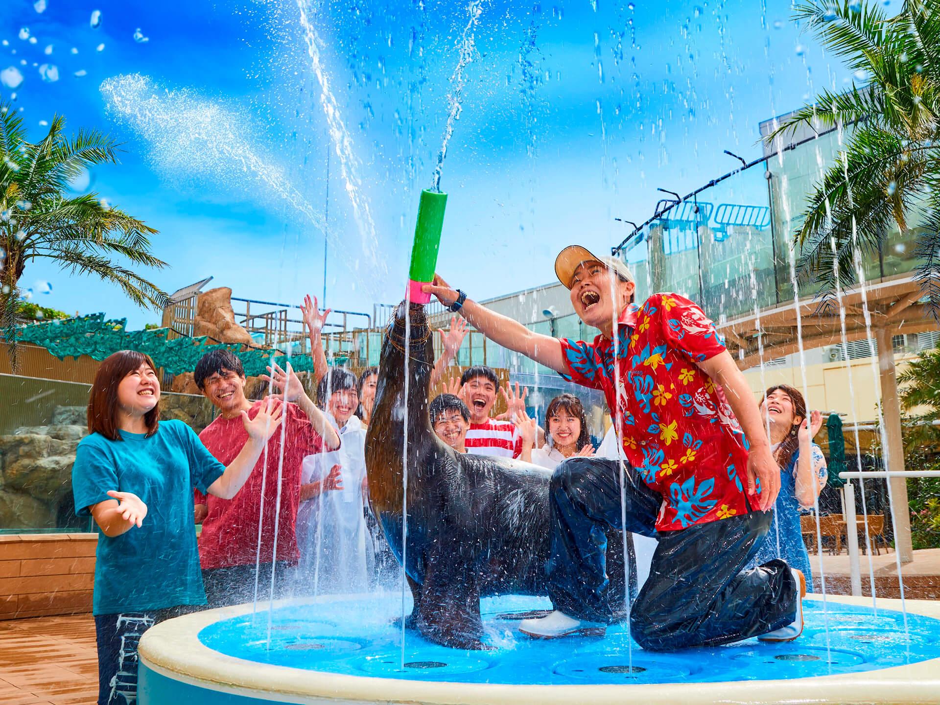 この写真はサンシャイン水族館 夏フェス2019の、アシカのびちょびちょ大作戦!の様子。あしかが水を好いています。