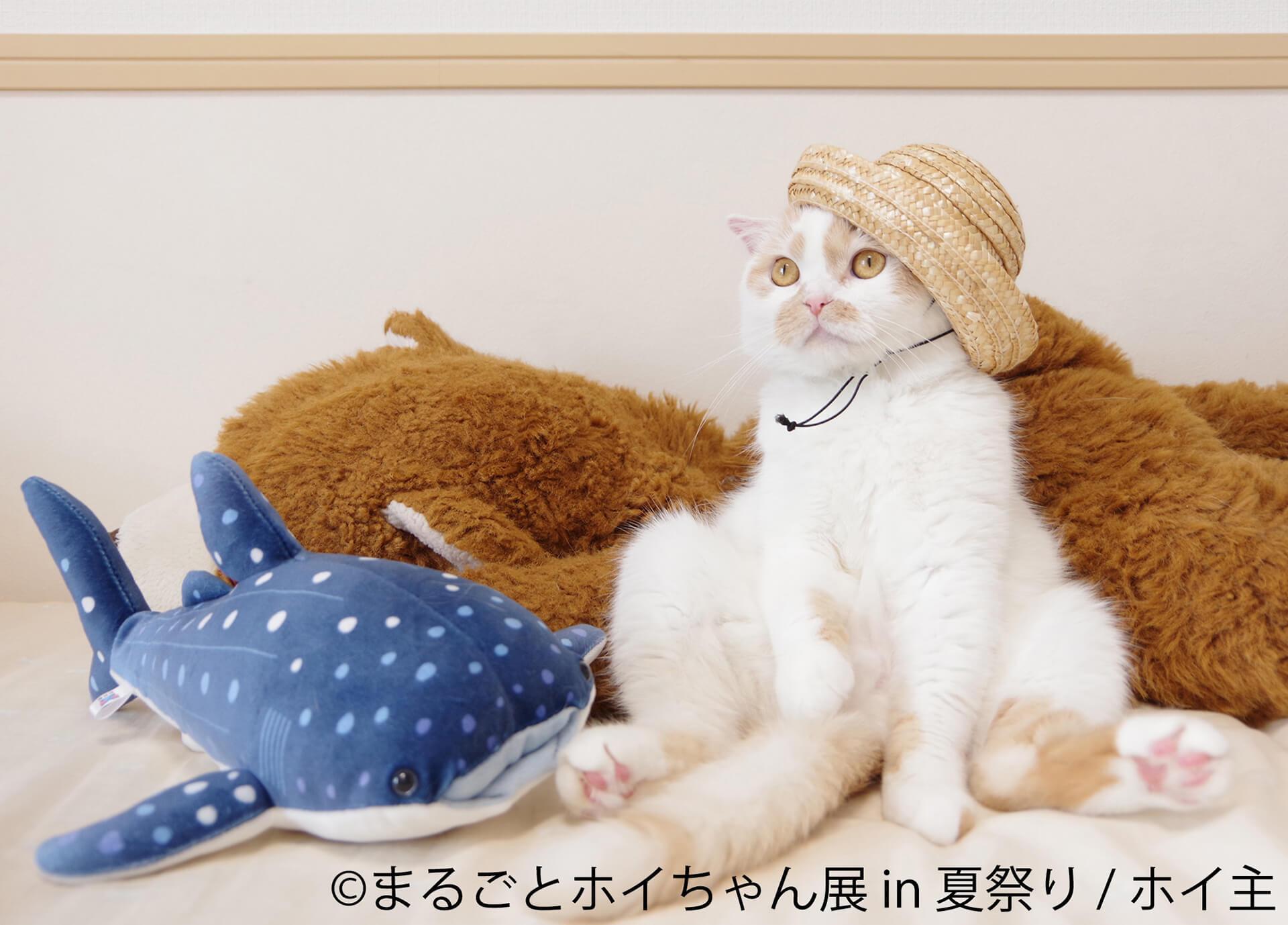 この写真はまるごとホイちゃん展 in 夏祭りの展示例。ホイちゃんが麦わら帽子を被っています