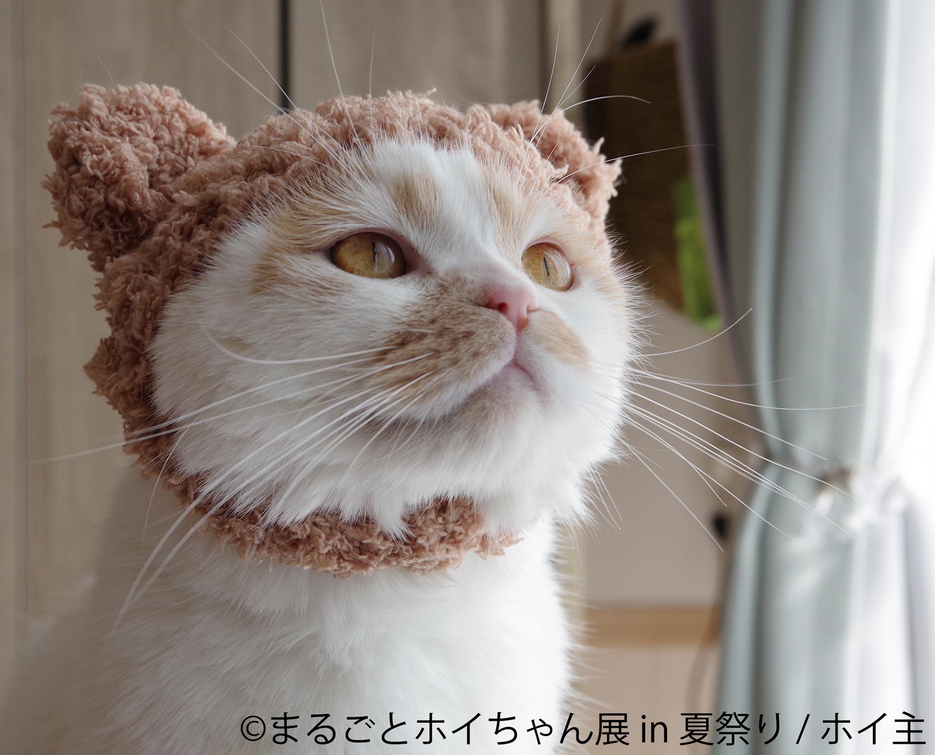 この写真はまるごとホイちゃん展 in 夏祭りの展示例。ホイちゃんがかわいいほおかむりしています