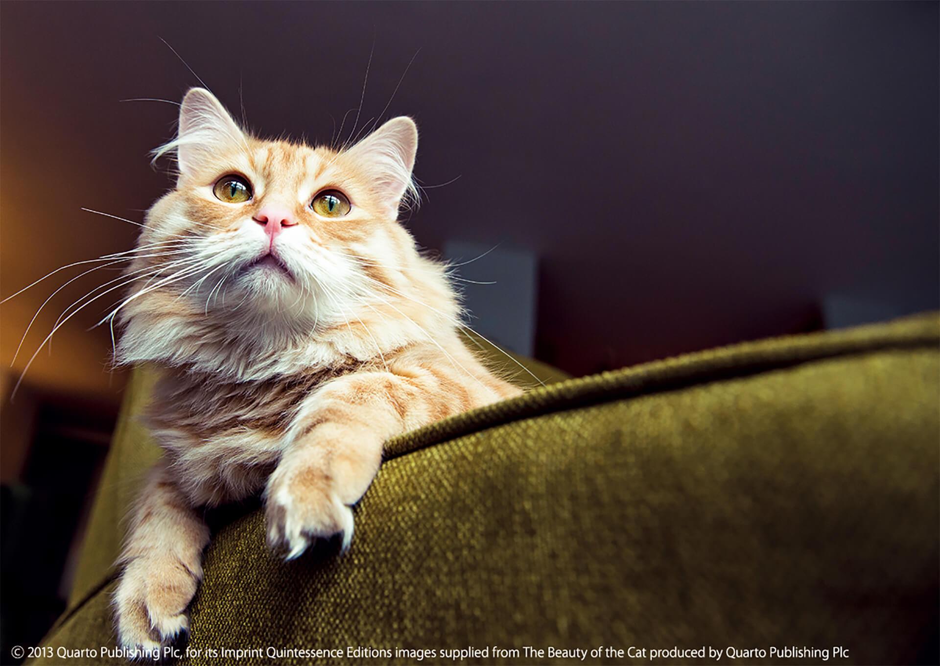 この写真はねこがかわいいだけ展の出展写真・猫がぼけっとしてます