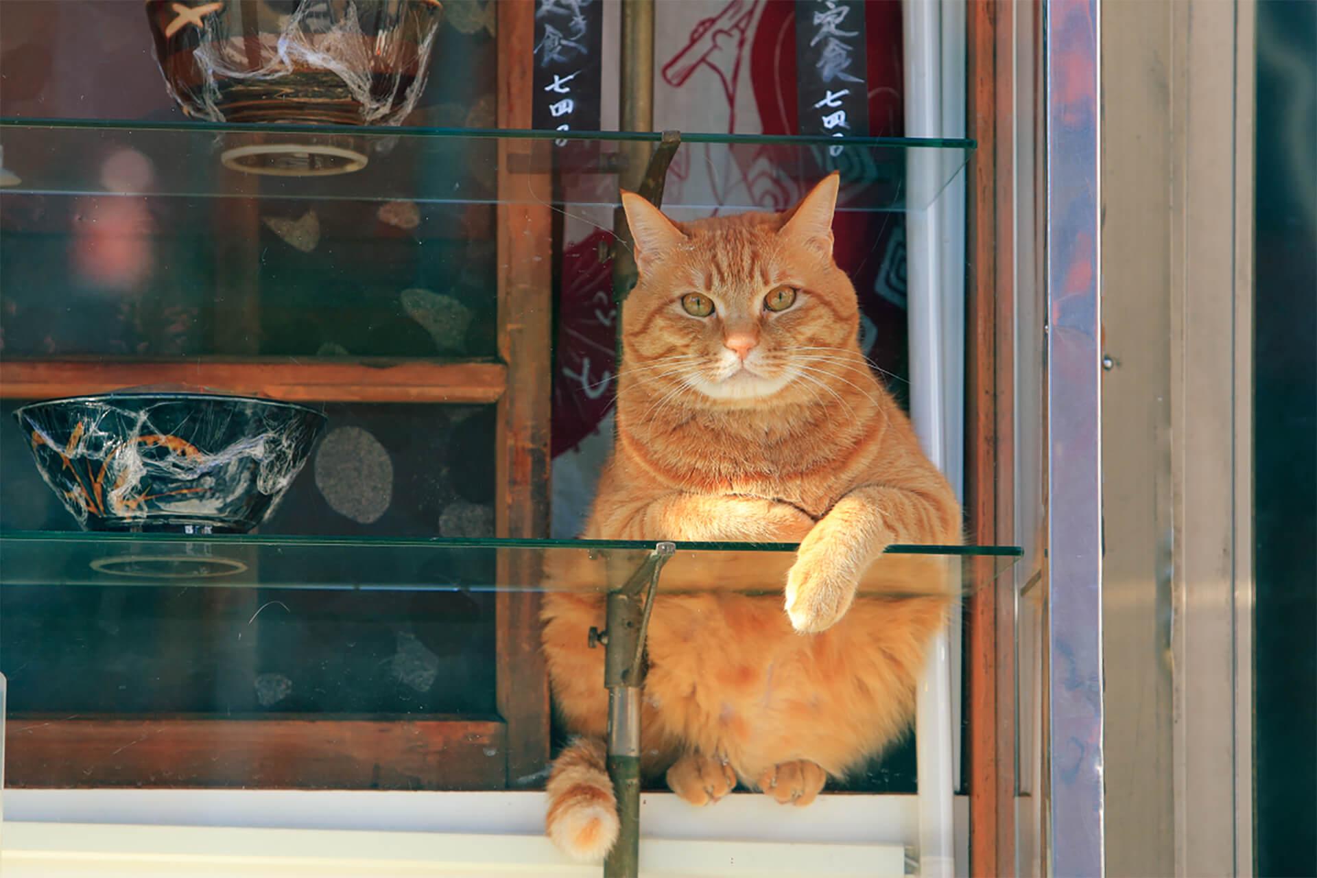 この写真はねこがかわいいだけ展の出展写真・猫がこっちをみてます