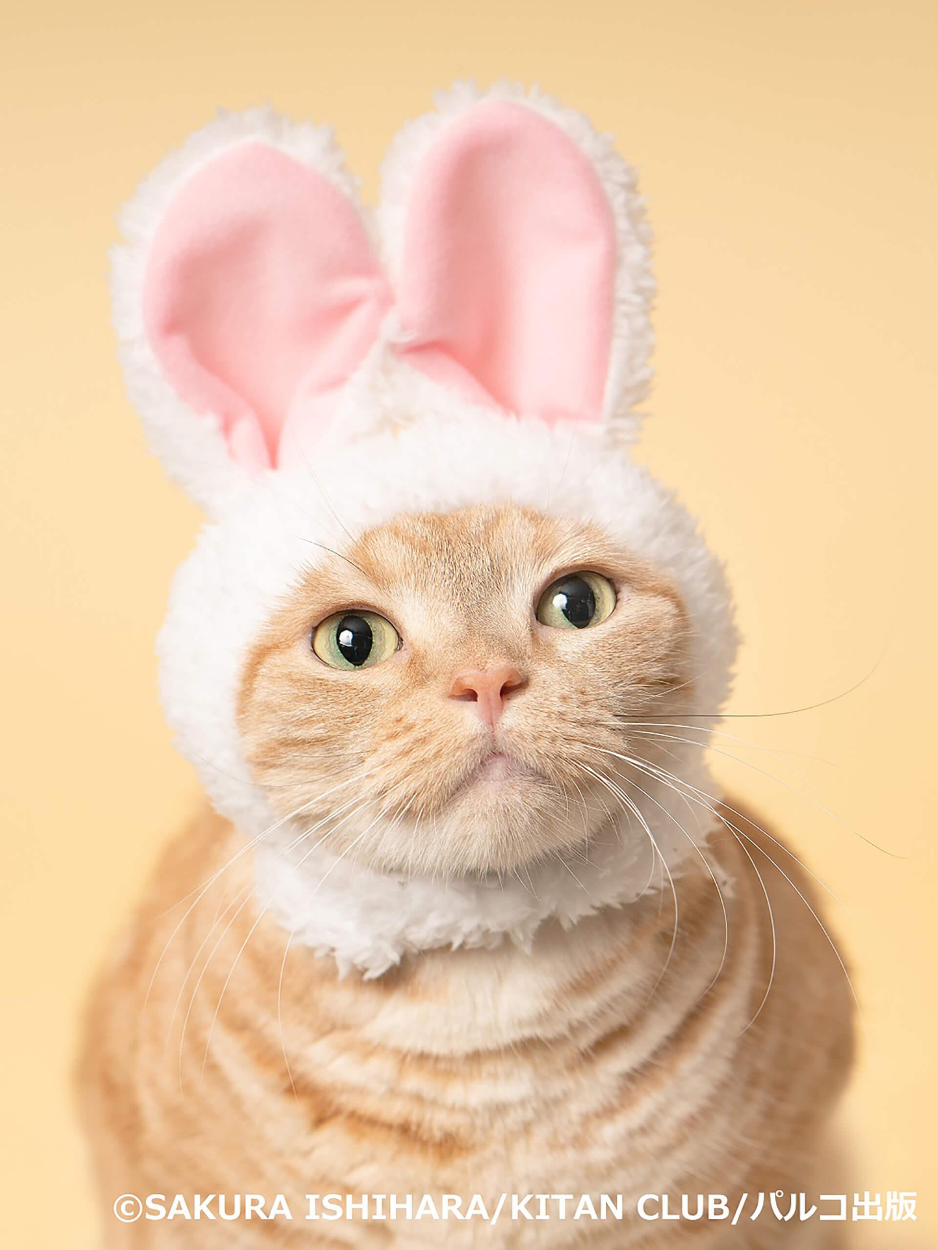 この写真はねこがかわいいだけ展の出展写真・猫がウサギの帽子かぶってます