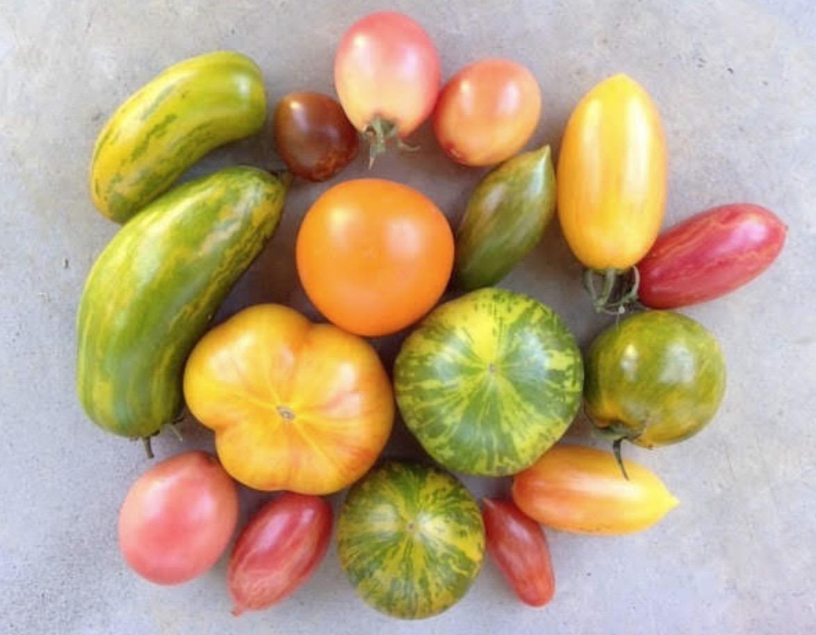 様々な色のトマト