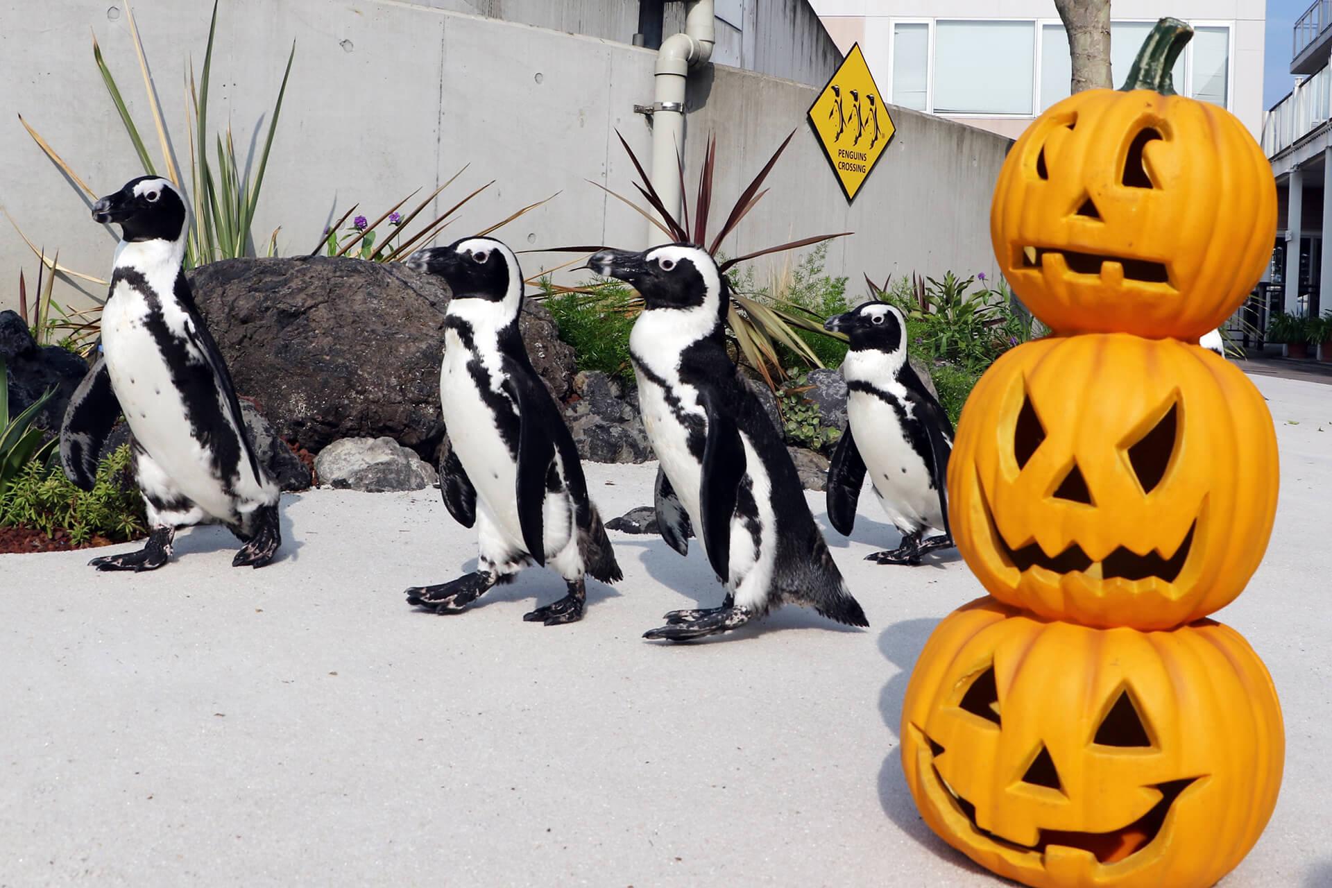 ペンギンとハロウィンのかぼちゃ