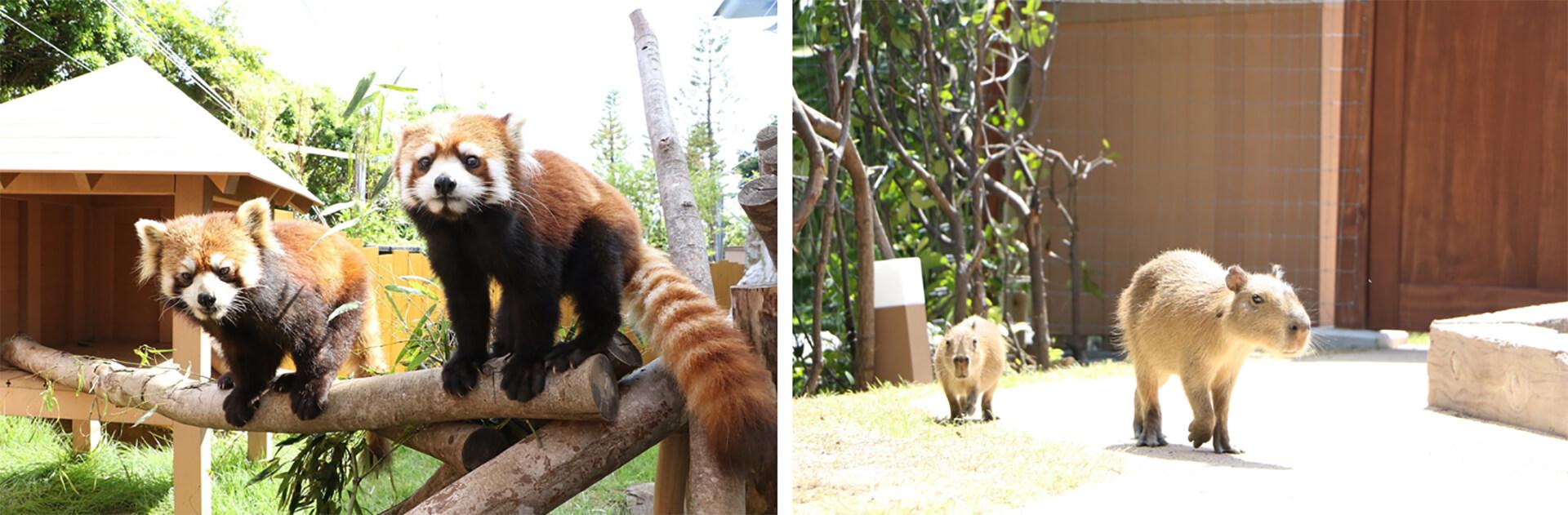 レッサーパンダと森のなかまたち