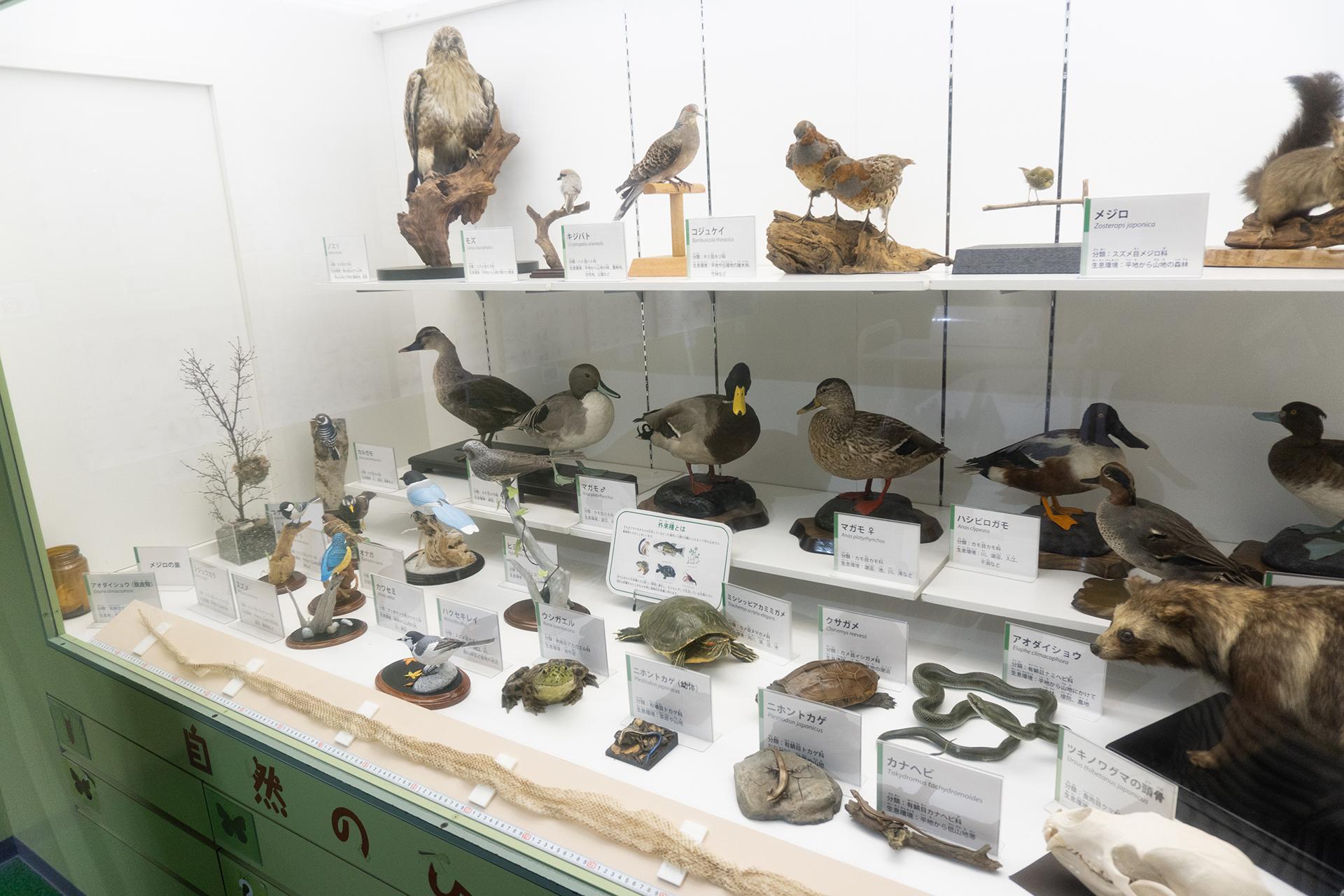 多摩六都科学館・自然の部屋・鳥