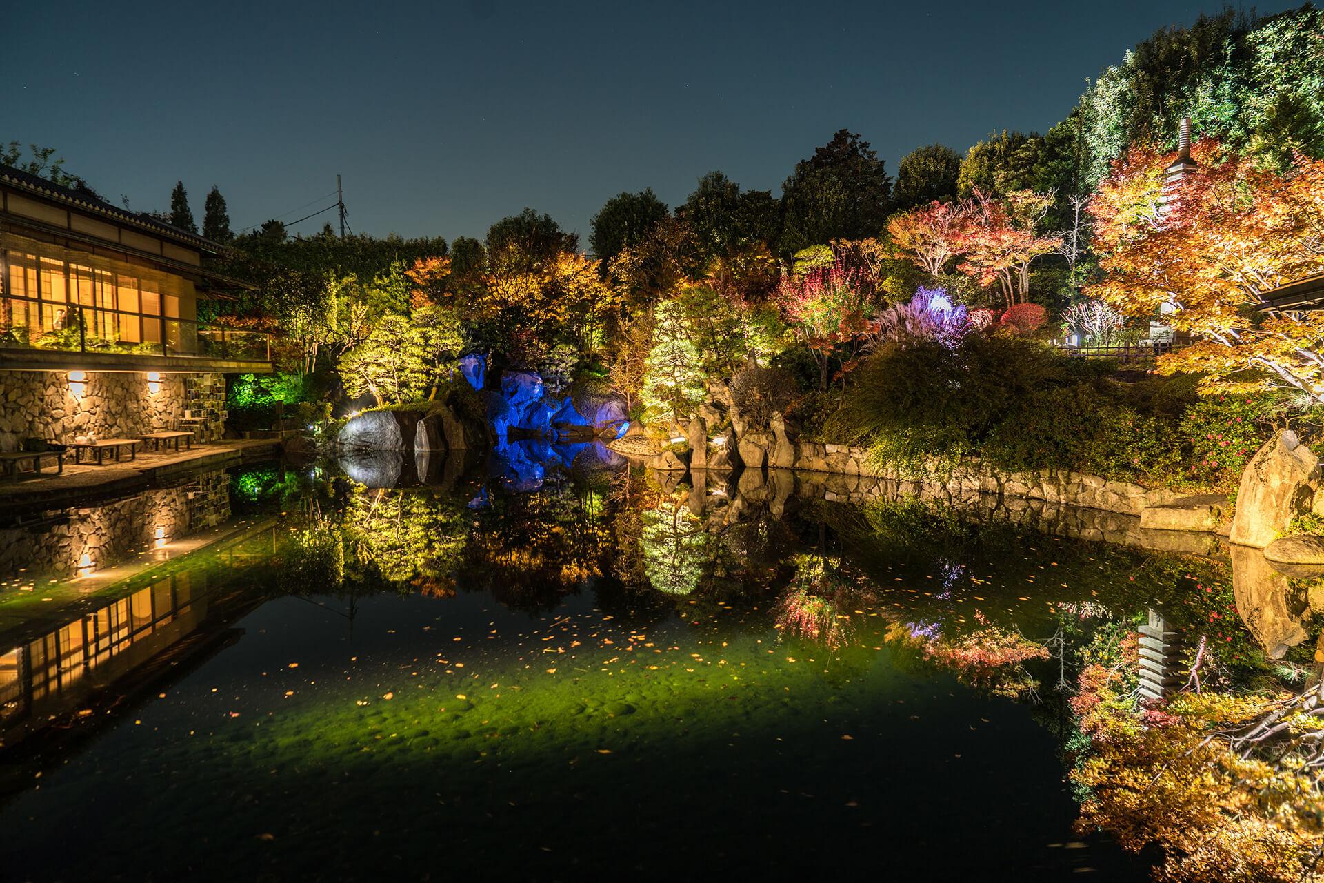 秋の庭園ライトアップ・区立目白庭園