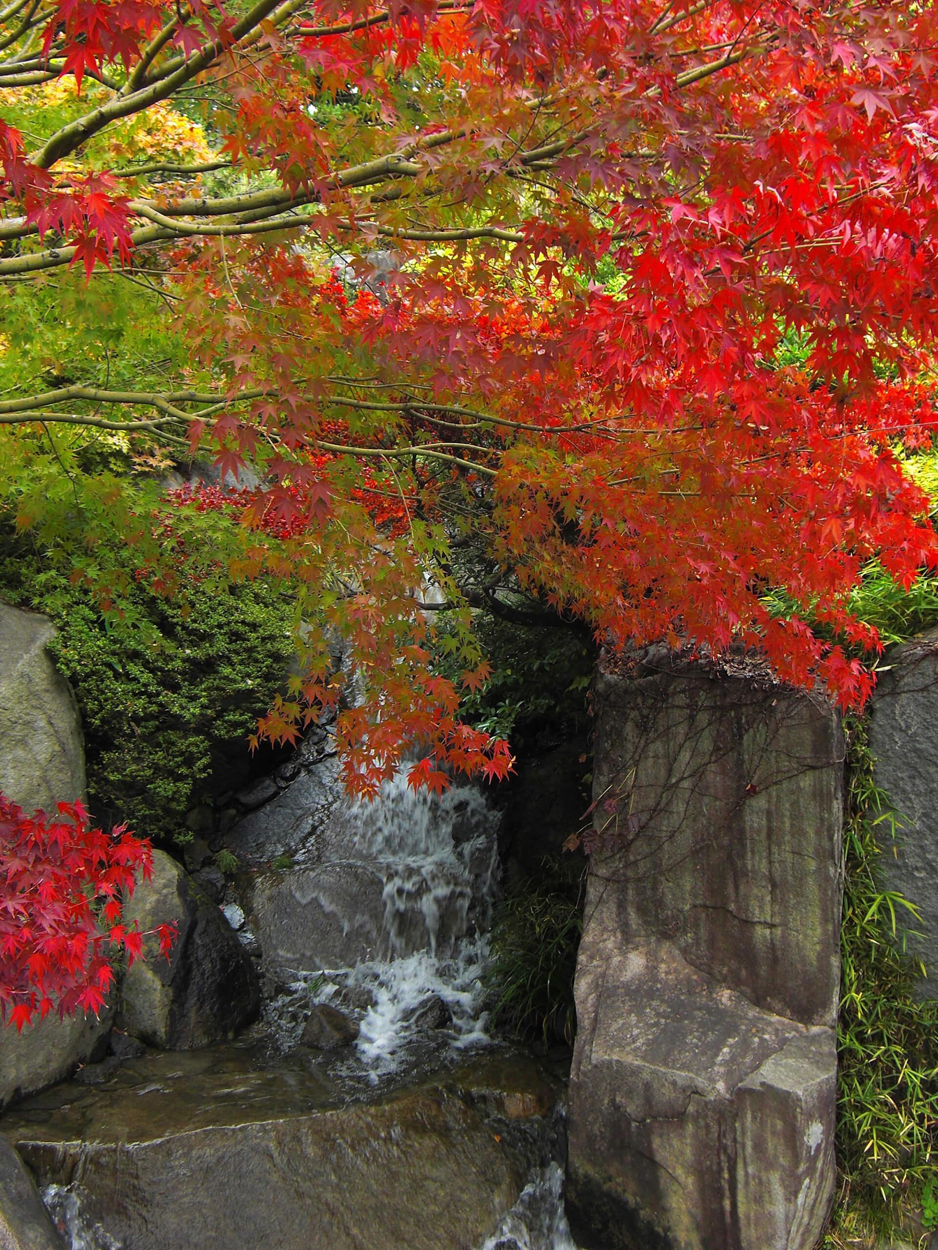 区立目白庭園・紅葉