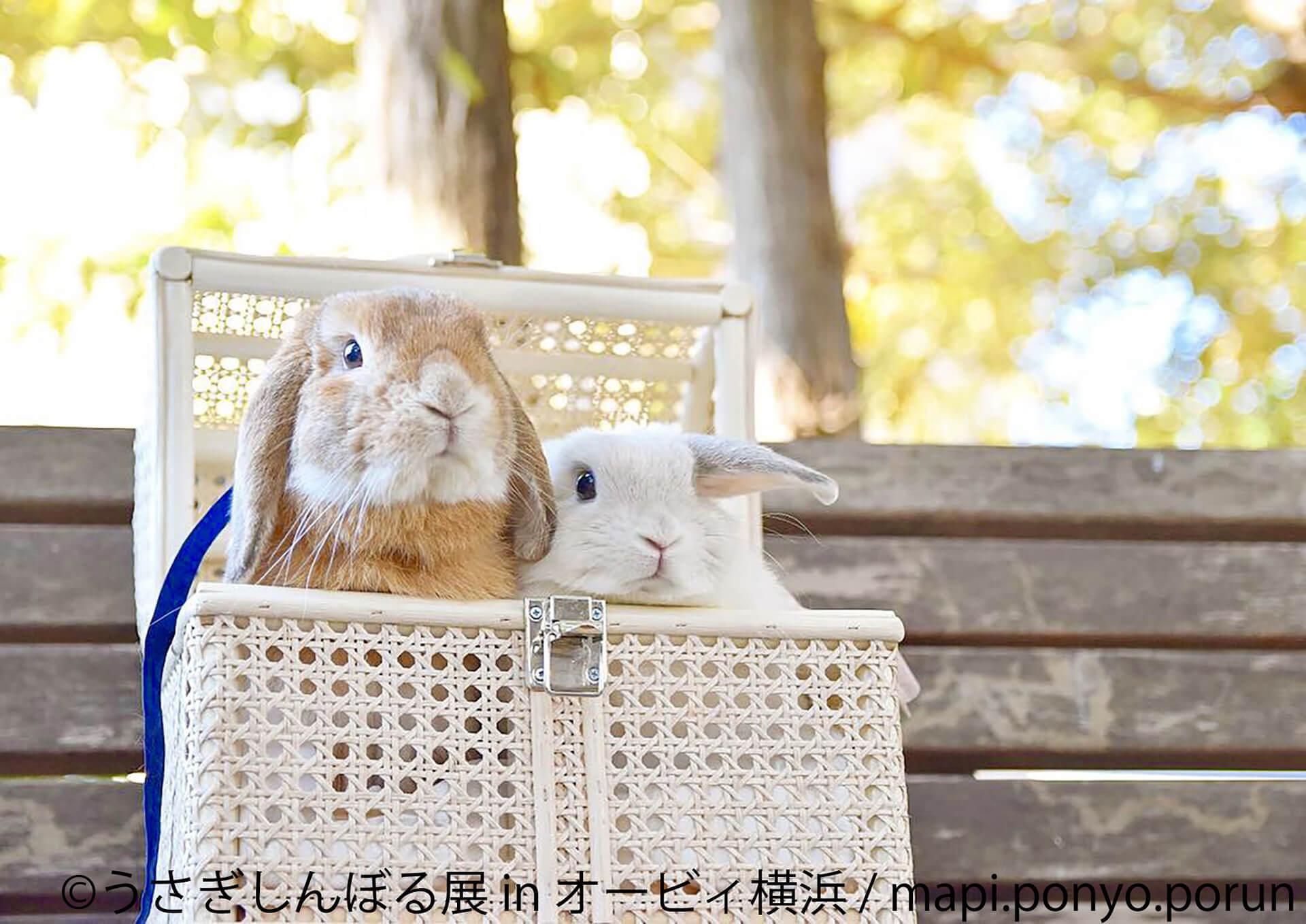 うさぎしんぼる展 in オービィ横浜