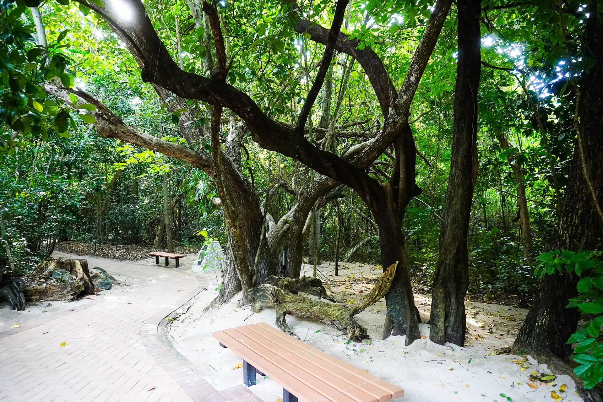 ケアンズ・グリーン島の森林