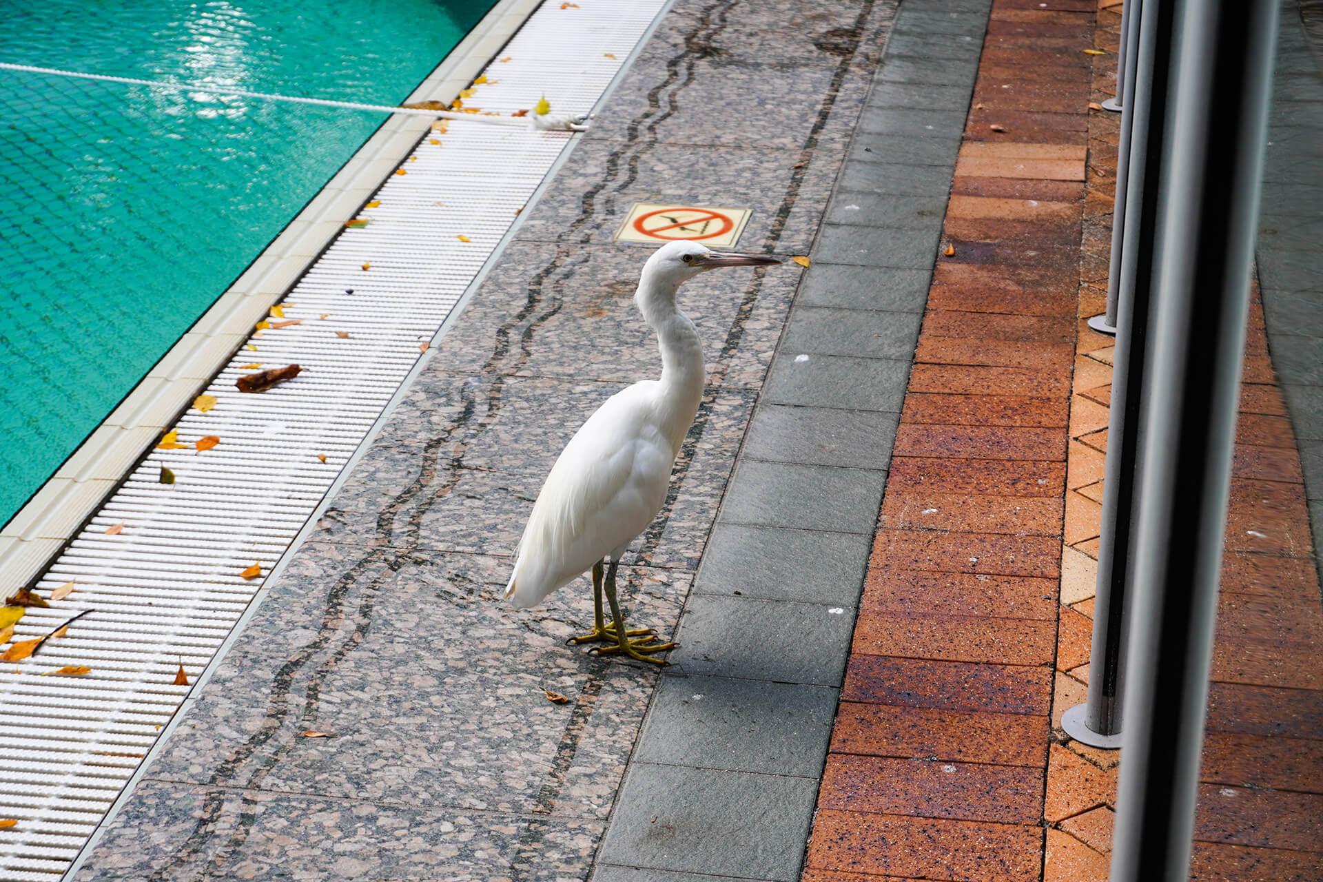 ケアンズ・グリーン島の鳥