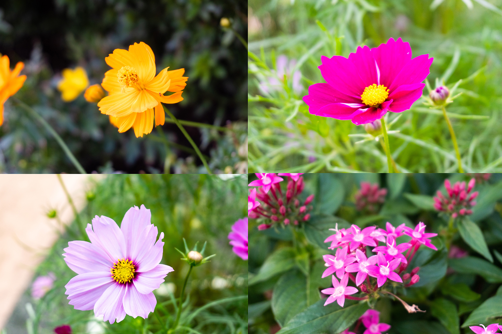 花やしき屋上花