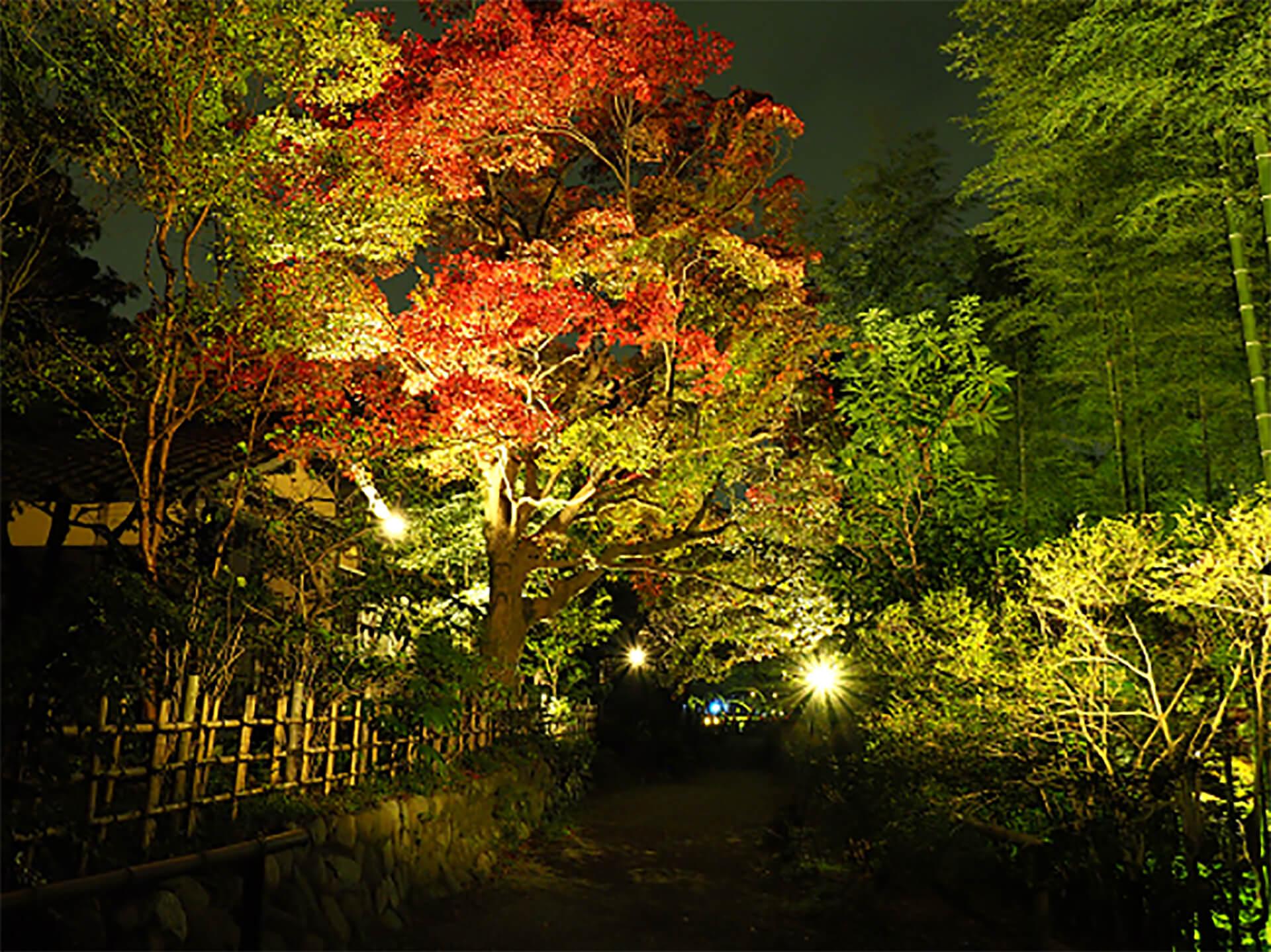 京王百草園・紅葉まつり