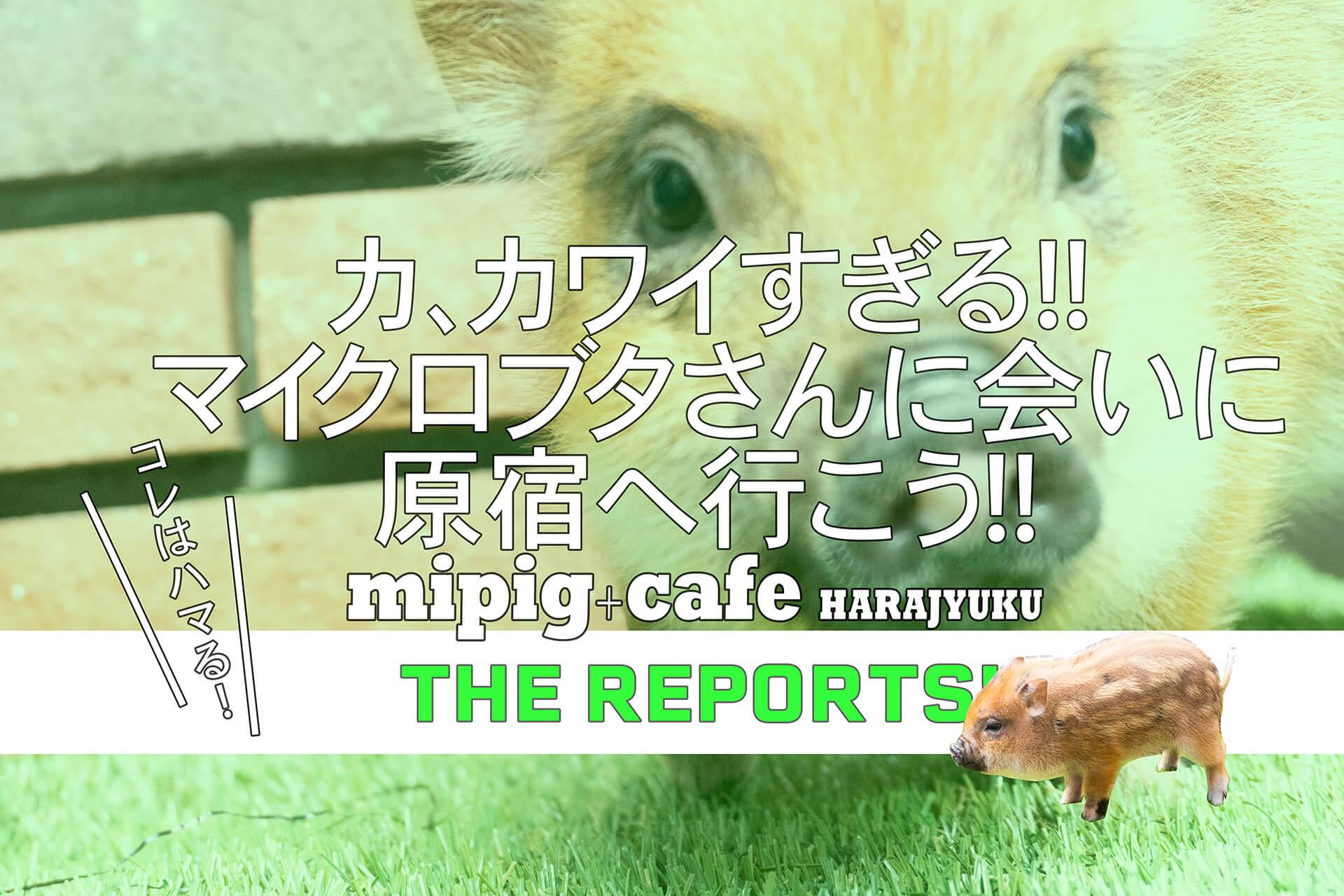 mipigcafe原宿店バナー