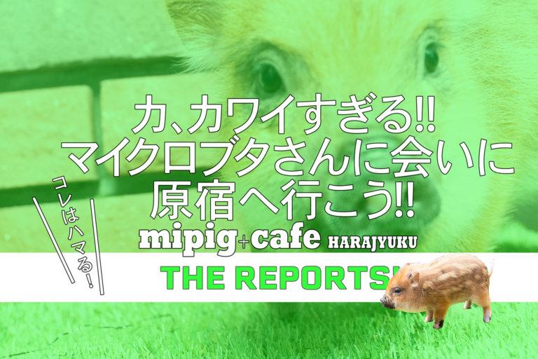 mipigcafe原宿店バナー 2