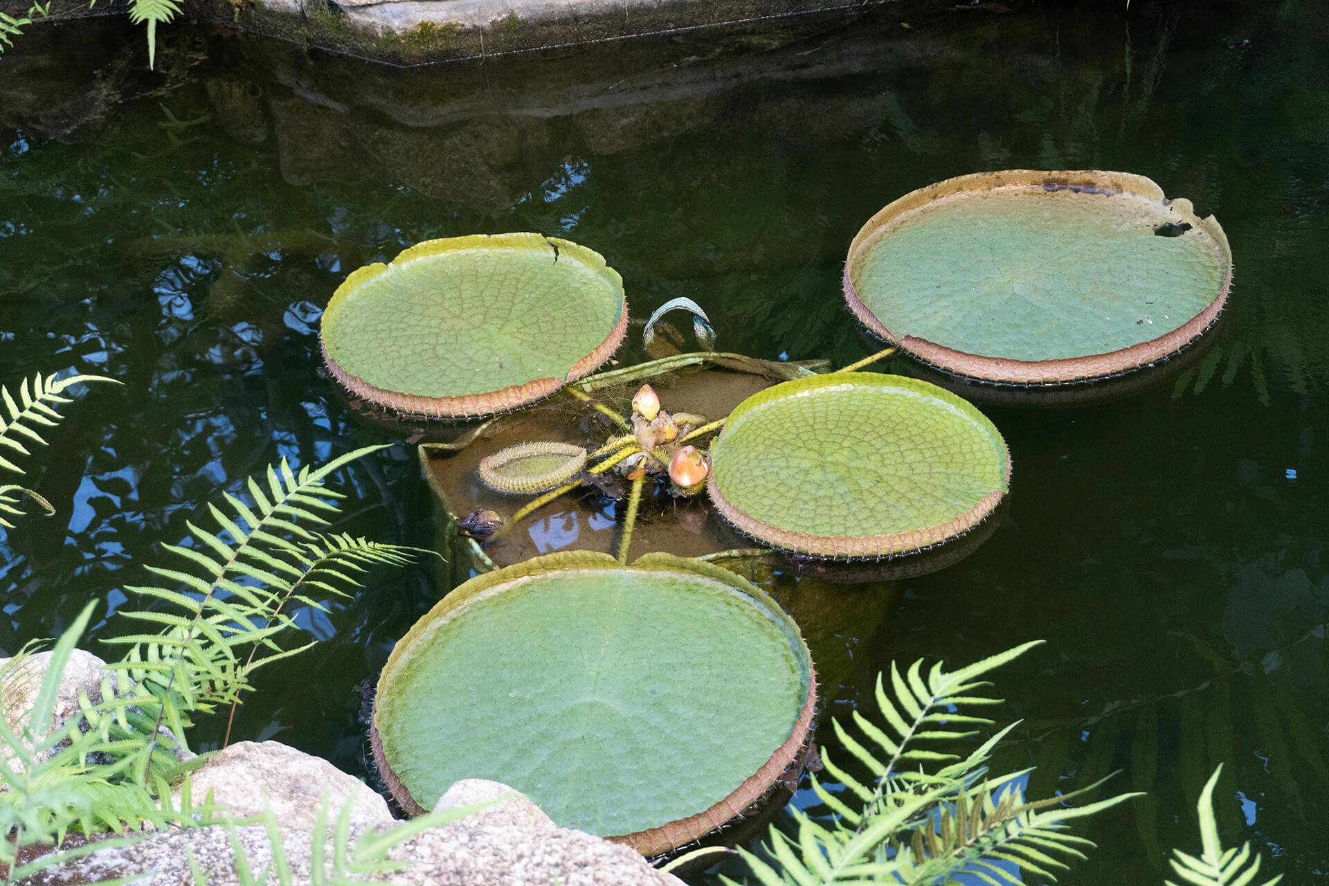 神代植物公園温室