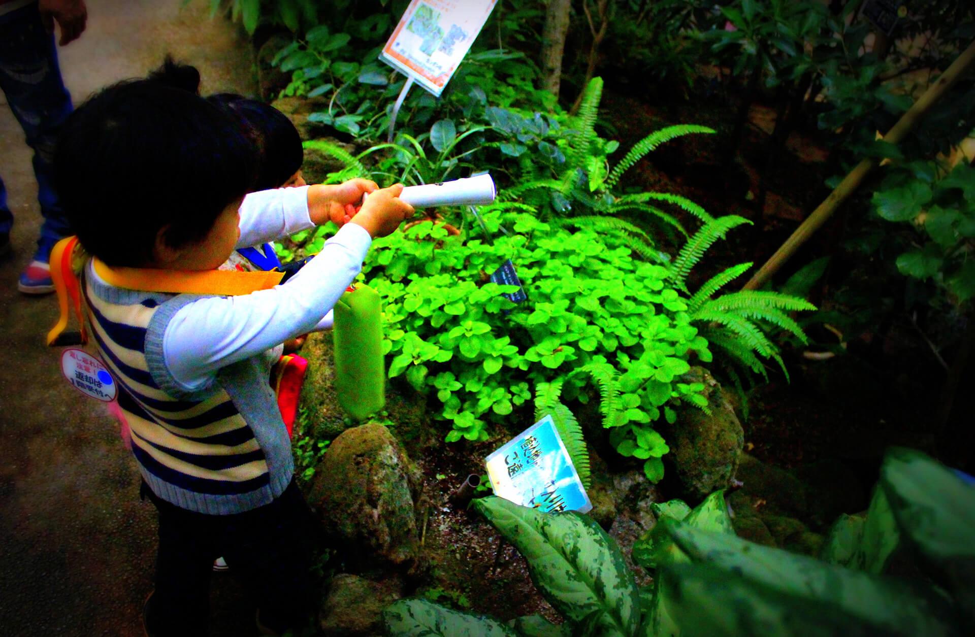 トワイライト ジャングル探検