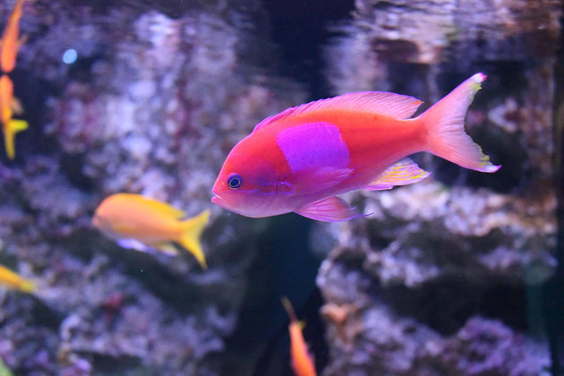 マクセル アクアパーク品川・展示魚