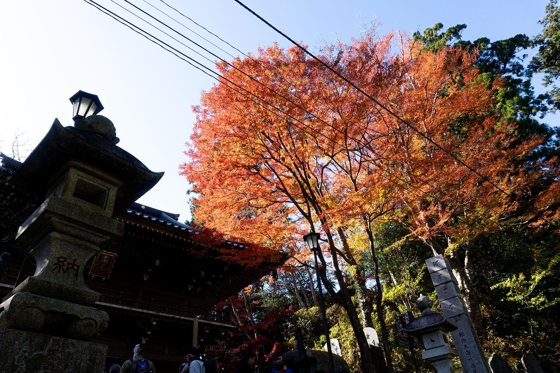 高尾山・紅葉