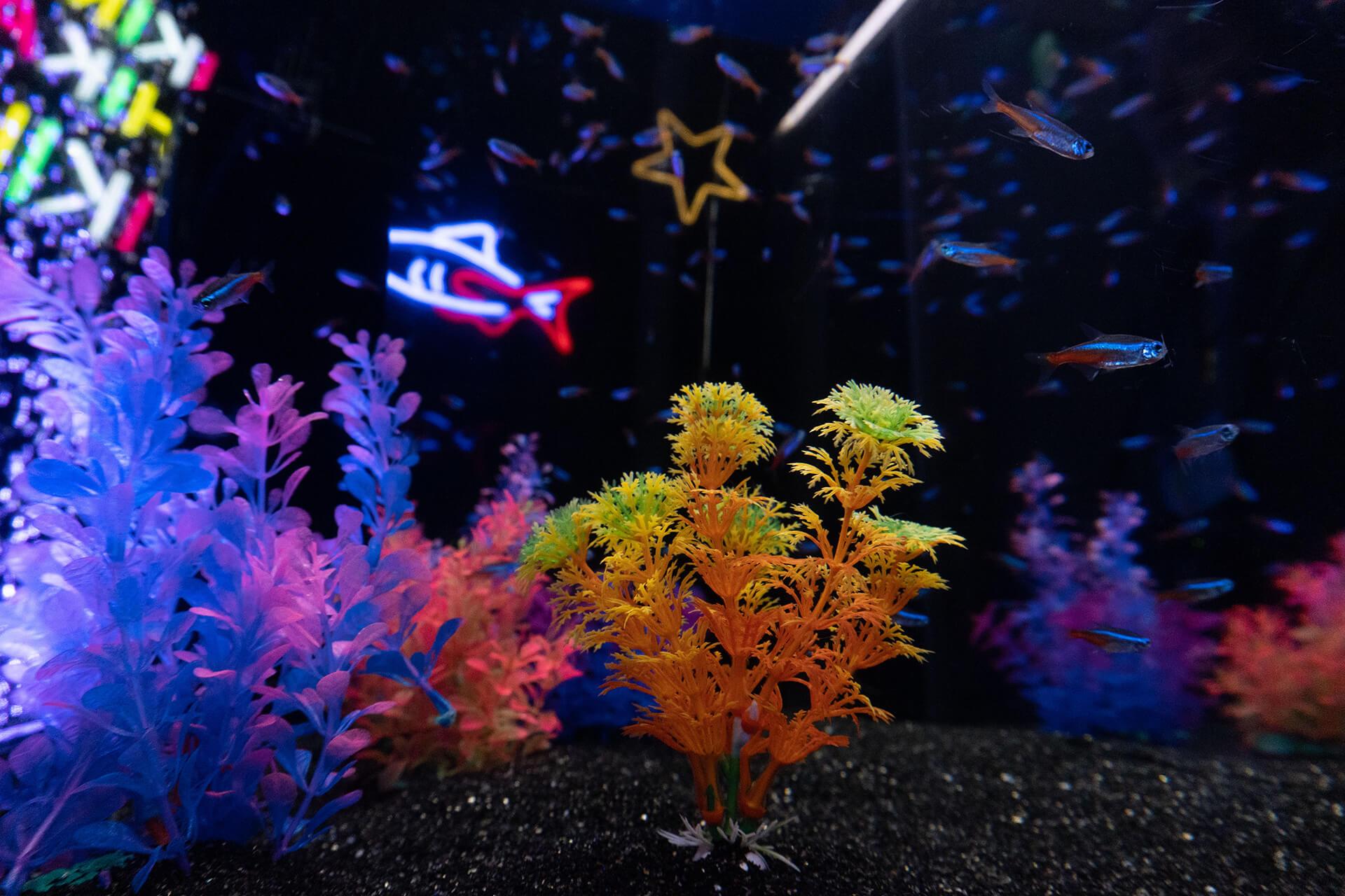 イキモノアート展・展示魚