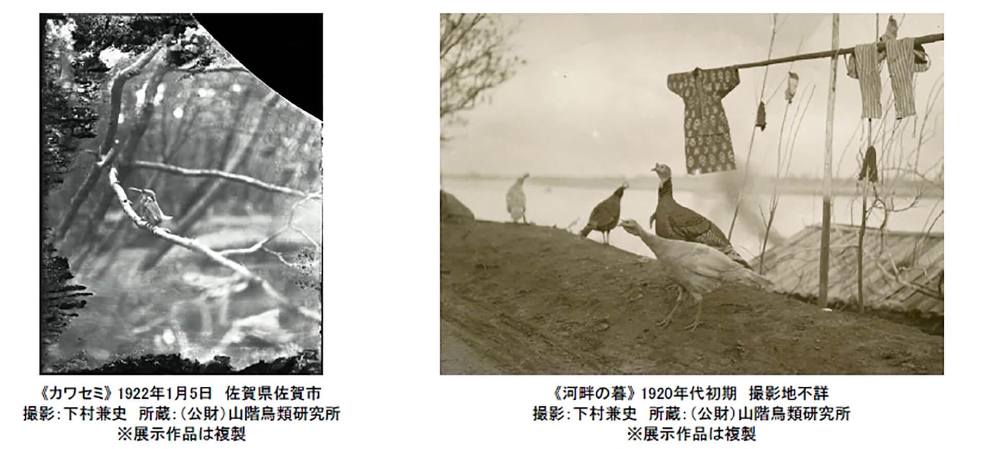 100年前にカワセミを撮った男・下村兼史-日本最初の野鳥生態写真家-展・写真