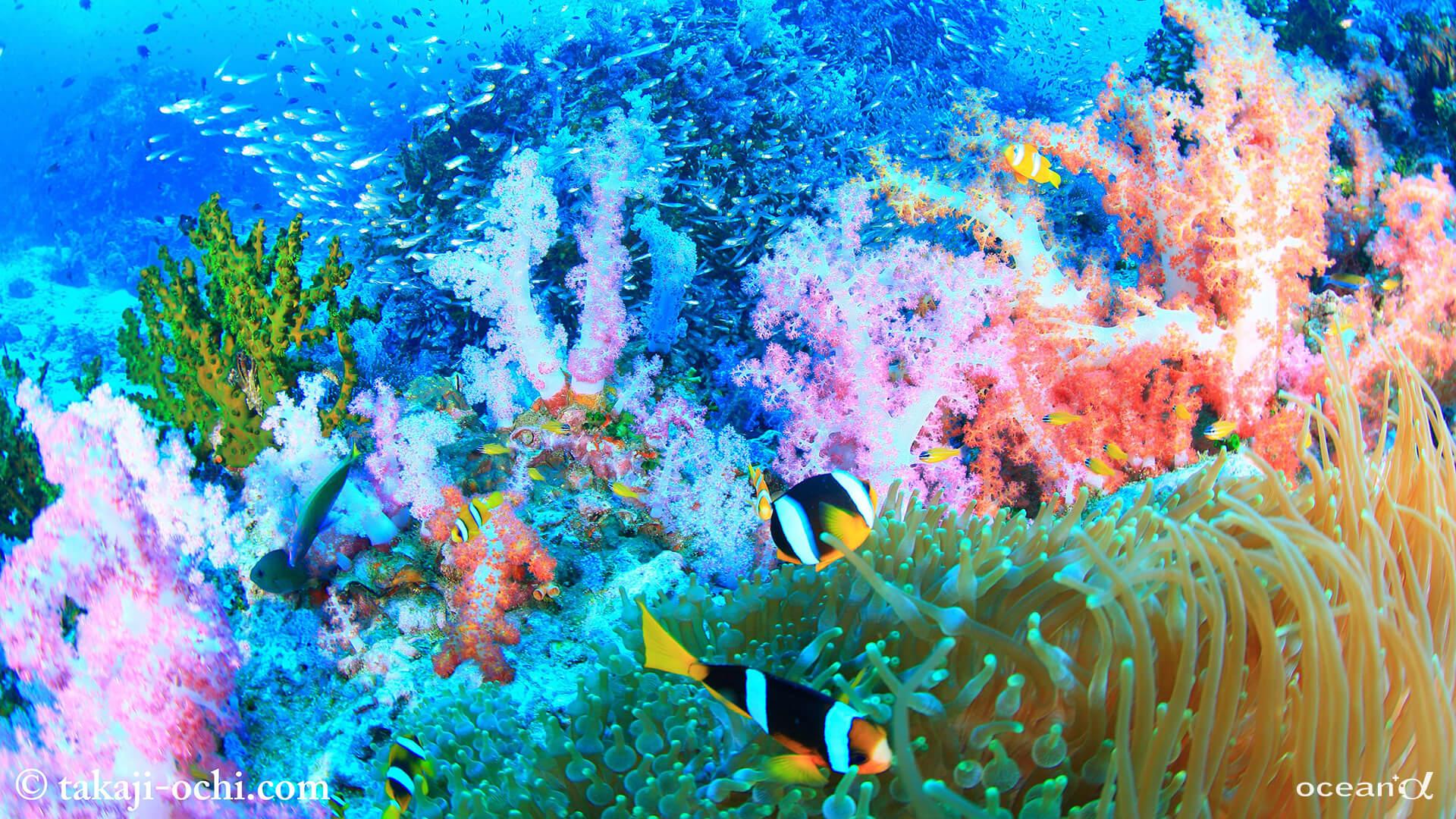 OCEAN+αオンライン背景用画像提供サービス