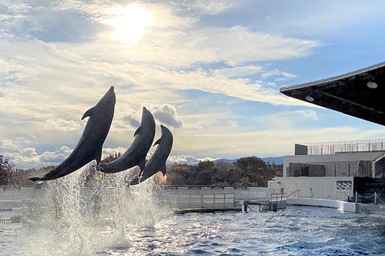 京都水族館・無観客イルカパフォーマンス