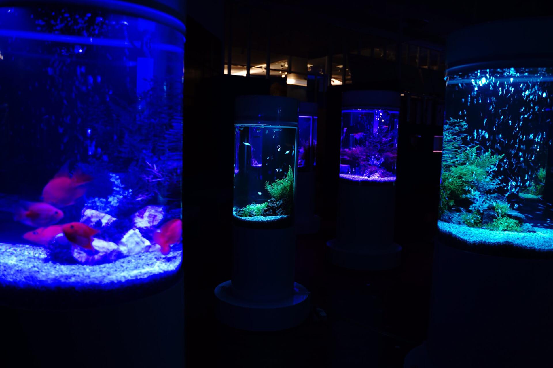 カフェ型水族館「ジュエリーアクアリウム」