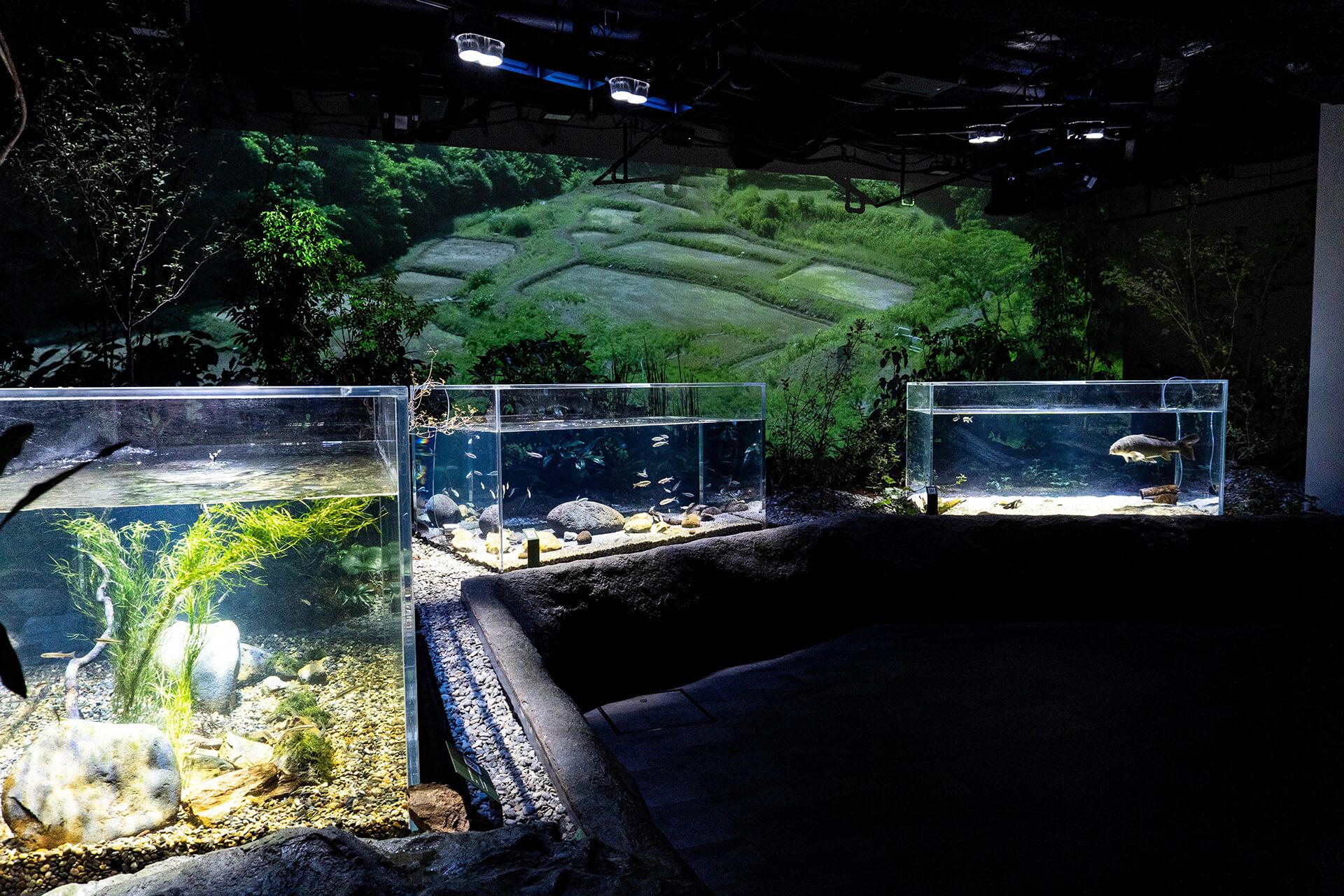 カワスイ・川崎水族館