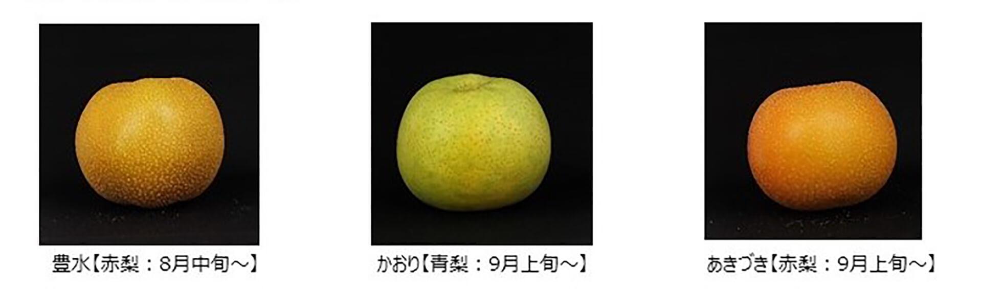 松戸 48観光梨園・直売&梨もぎ