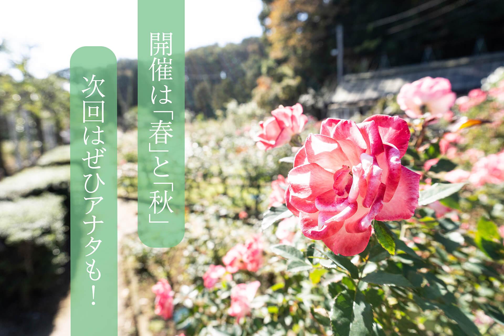 生田緑地バラ苑