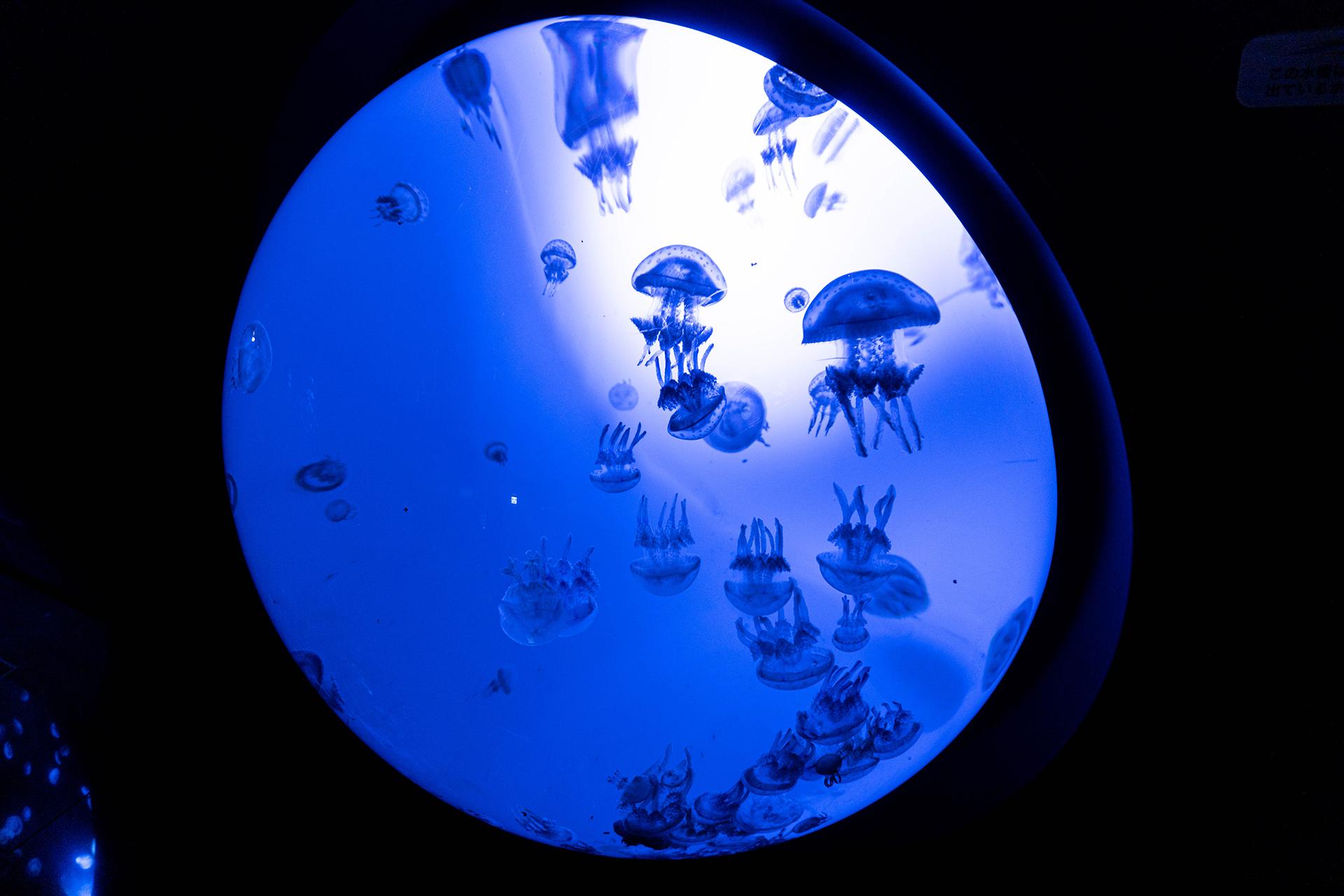 サンシャイン水族館・海月空感