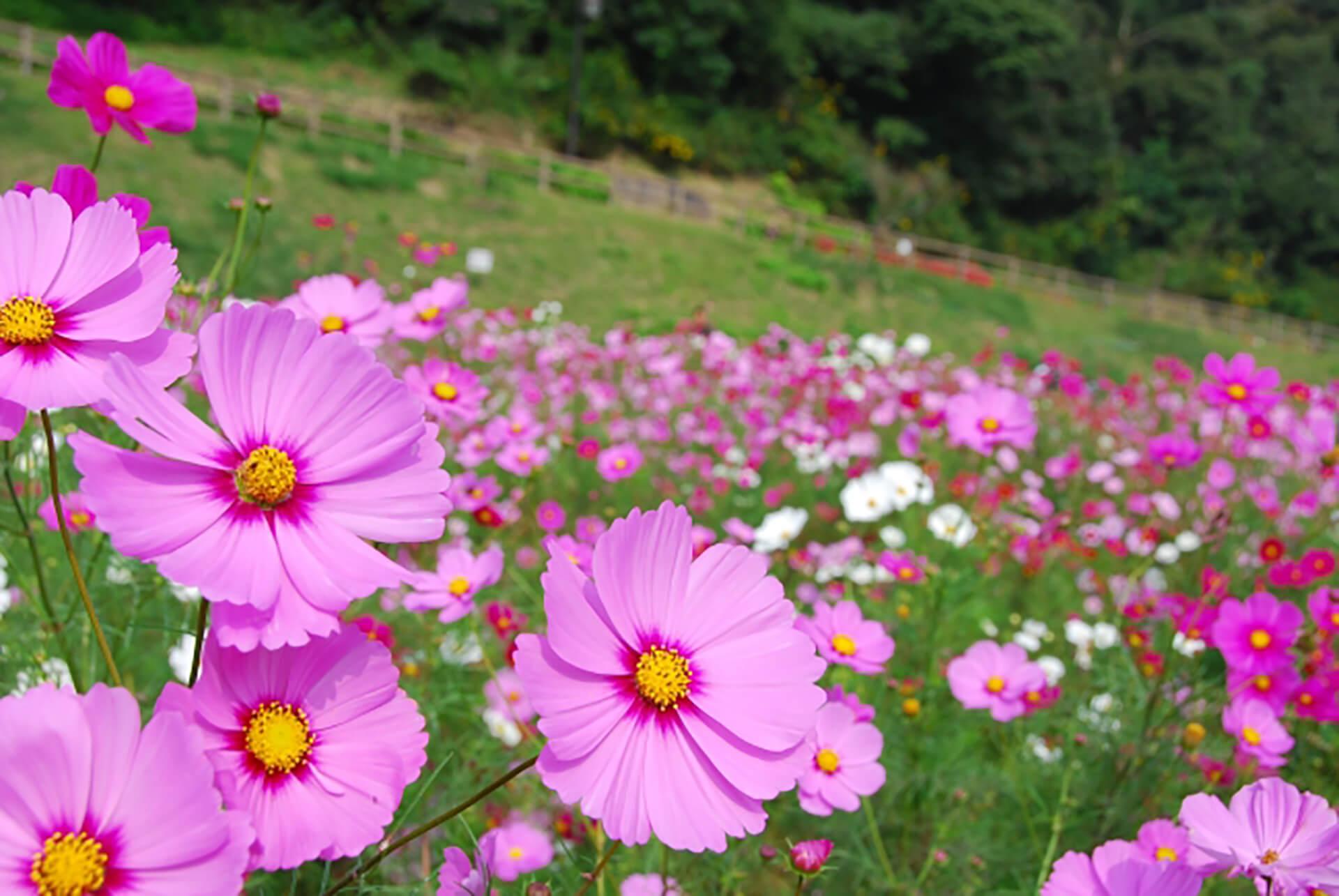横須賀市くりはま花の国「ウィンターイルミネーション2020」