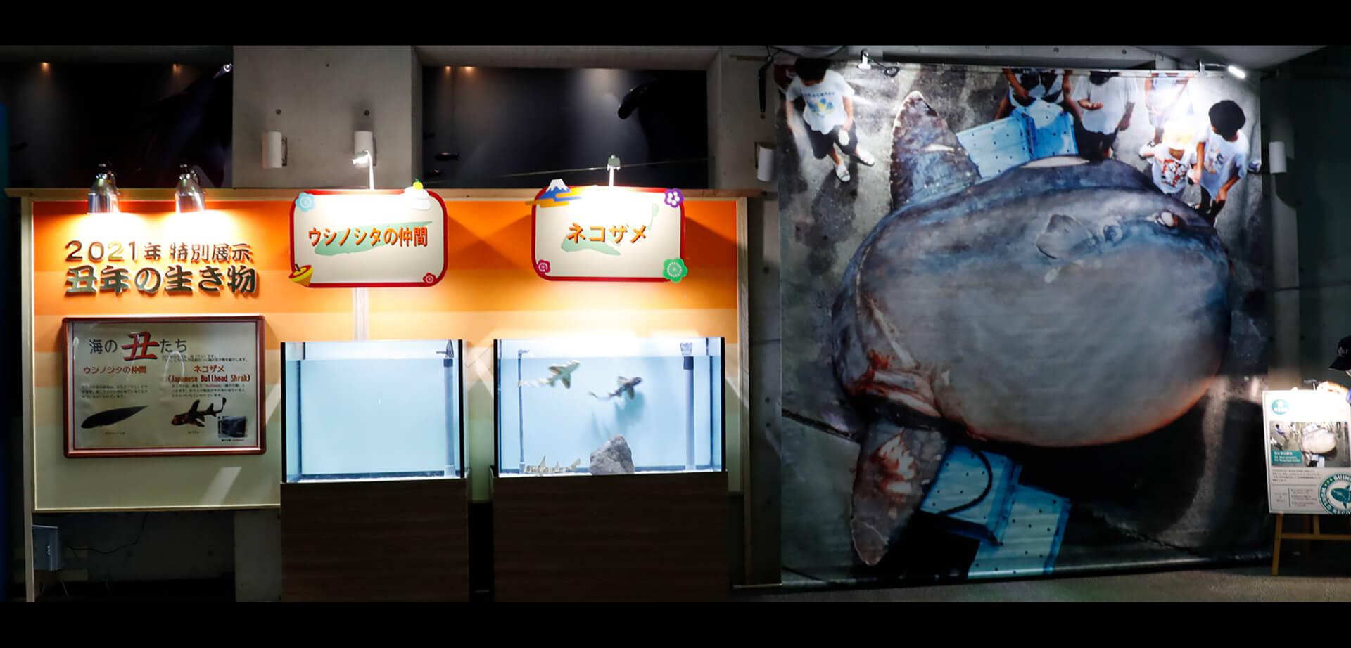 2021年干支の生き物 ~海の丑(ウシ)たち~