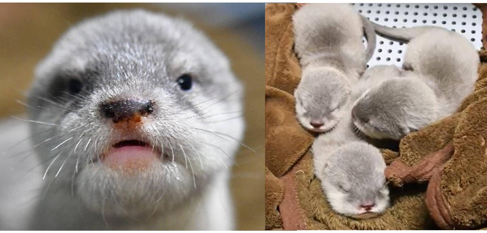 サンシャイン水族館「赤ちゃん3姉妹 赤ちゃんの名前募集」