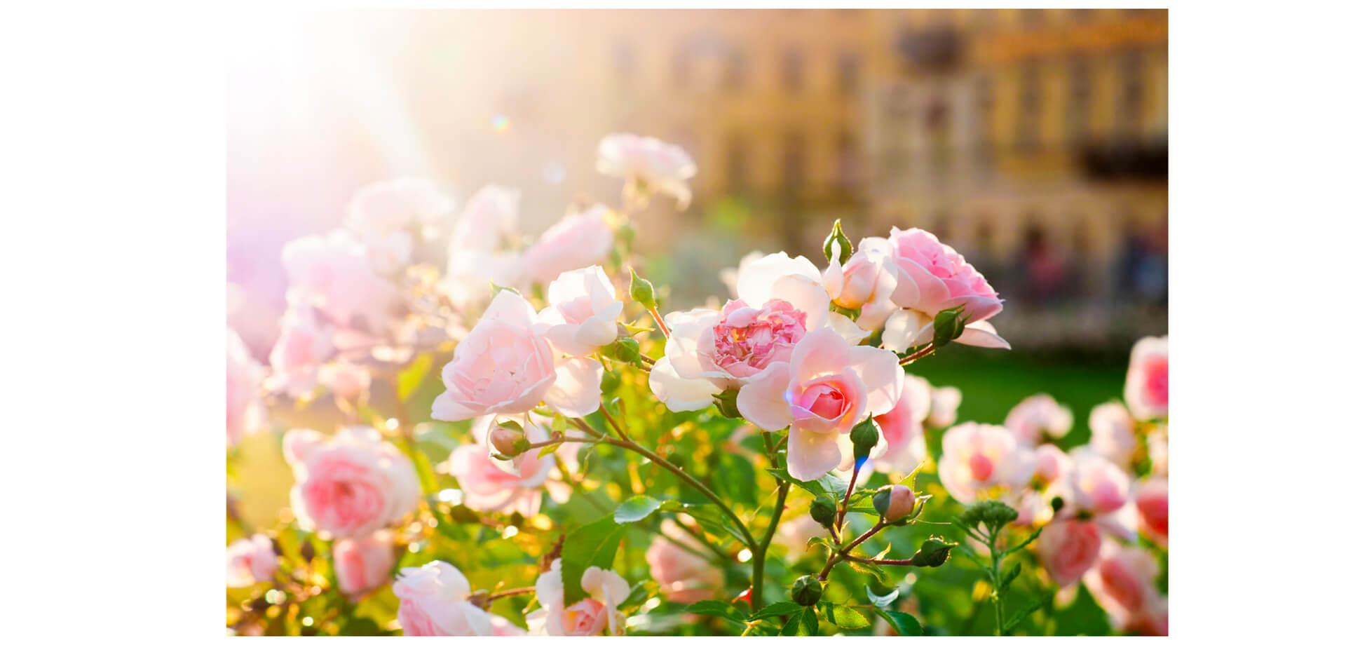 ファンケル銀座スクエア 「春のローズガーデン」