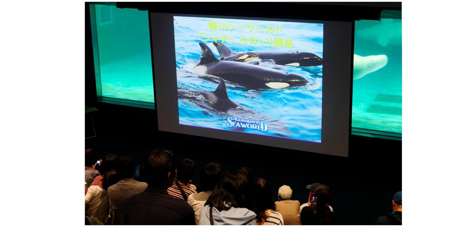 『国際博物館の日』記念イベント 特別レクチャー「シャチものしり講座」