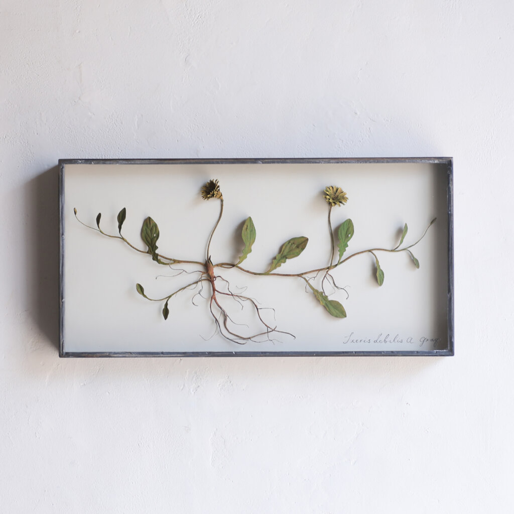 "【IDEE TOKYO】モリソン小林 作品展""small plants"""
