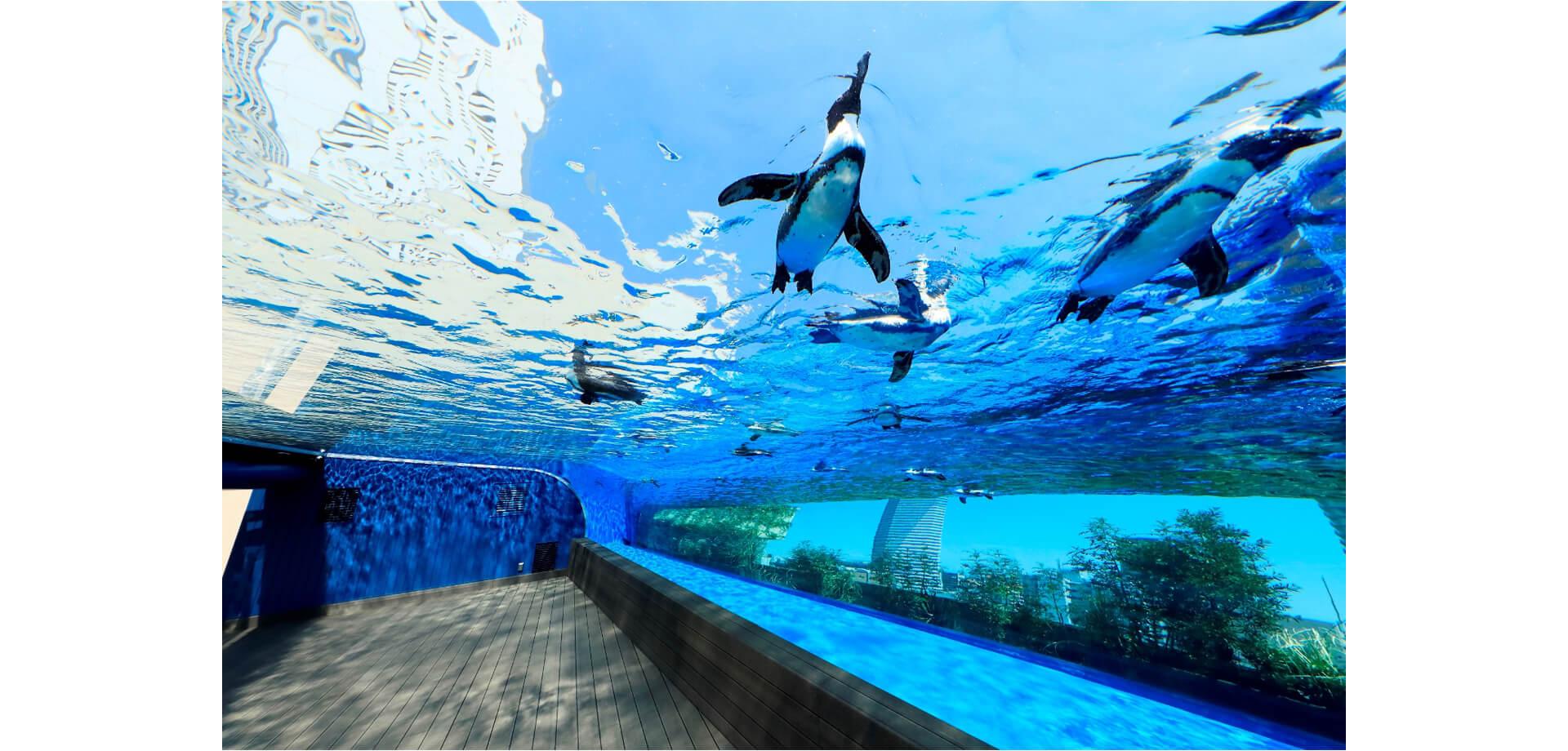サンシャイン水族館&サンシャイン60展望台 お得な割引サービス